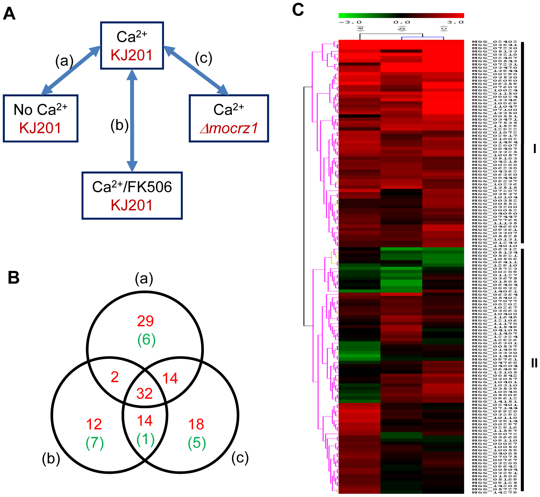 Expression dynamics of MoCRZ1 targets.