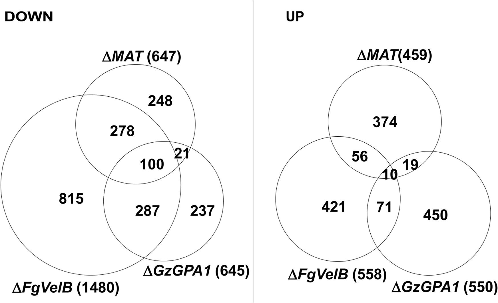 Number of DEGs in the <i>F</i>. <i>graminearum</i> strains lacking the individual <i>MAT</i> or both <i>MAT</i> loci (Δ<i>MAT</i>) overlapped with those from the Δ<i>FgVelB</i> and Δ<i>GzGPA1</i> strains, respectively.
