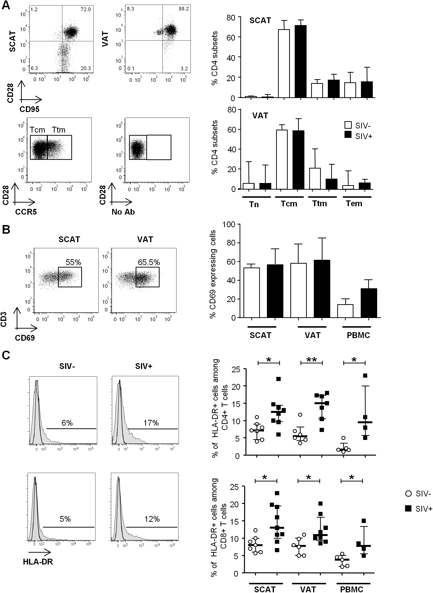 The influence of SIV infection on T cell differentiation and activation status.