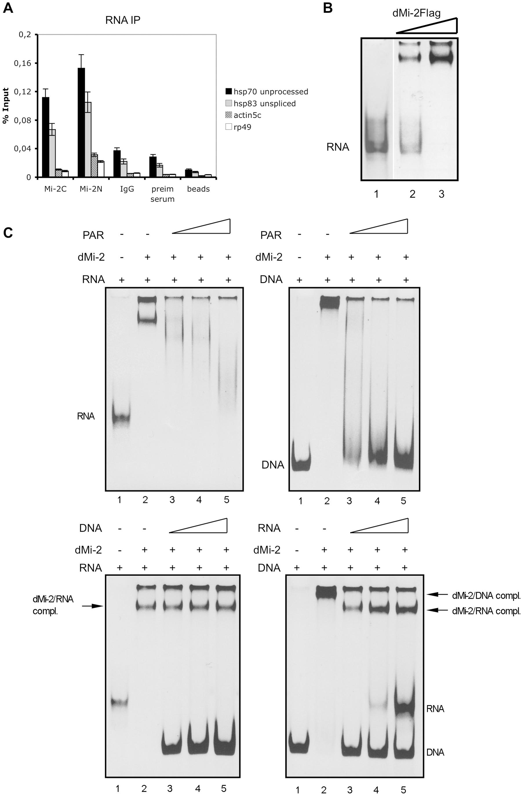 dMi-2 binds RNA.