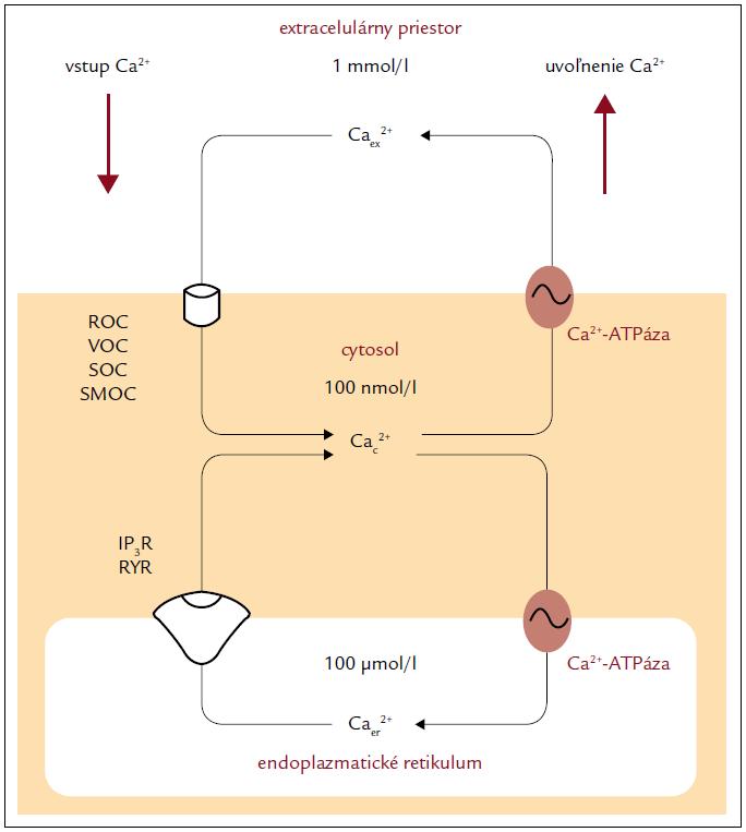 Základný mechanizmus udržiavania vápnikovej homeostázy bunky [4].