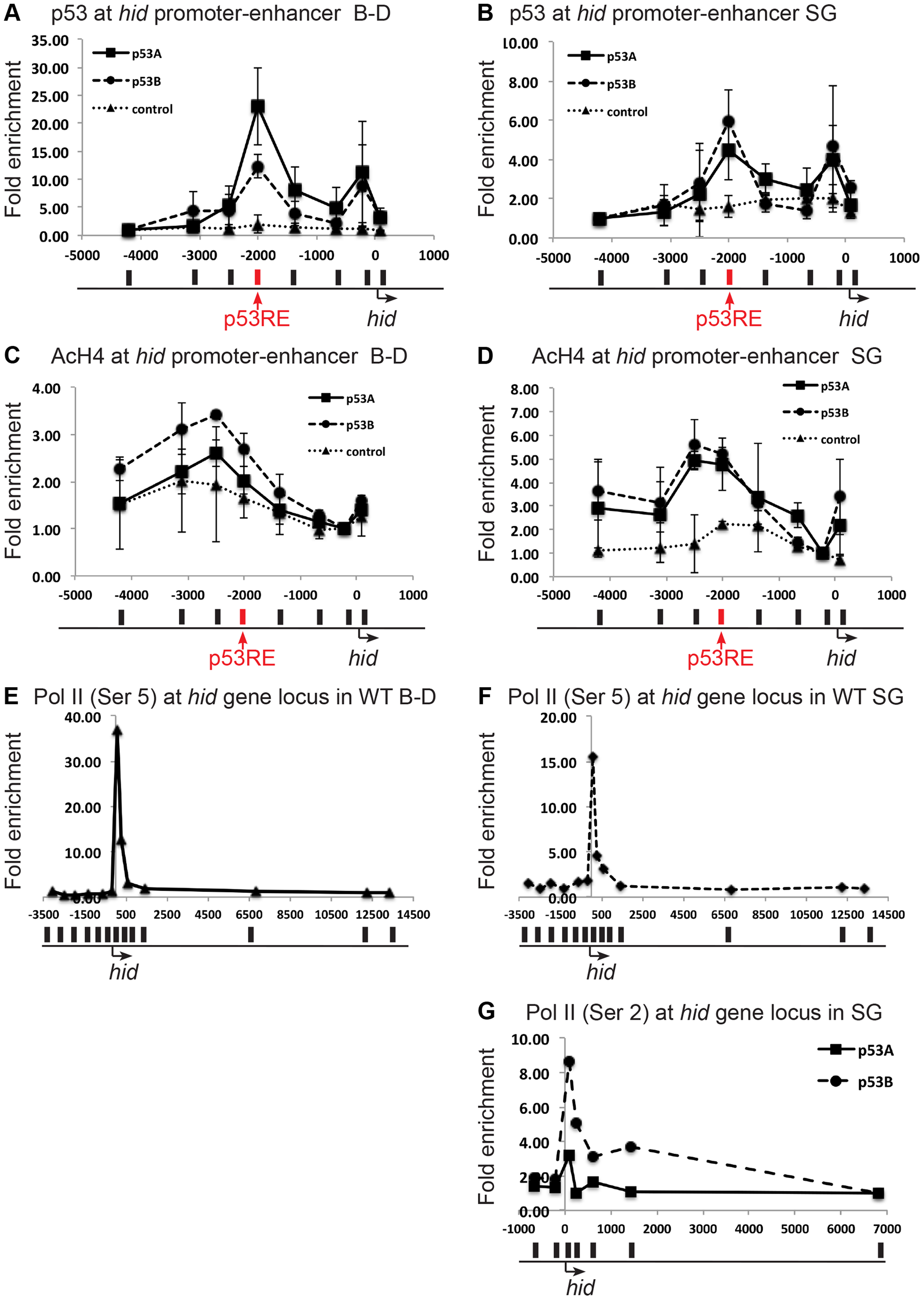 Both over-expressed p53A and p53B bind and recruit acetylation to the <i>hid</i> gene, but p53B is better at activating elongation of a paused RNA Pol II.