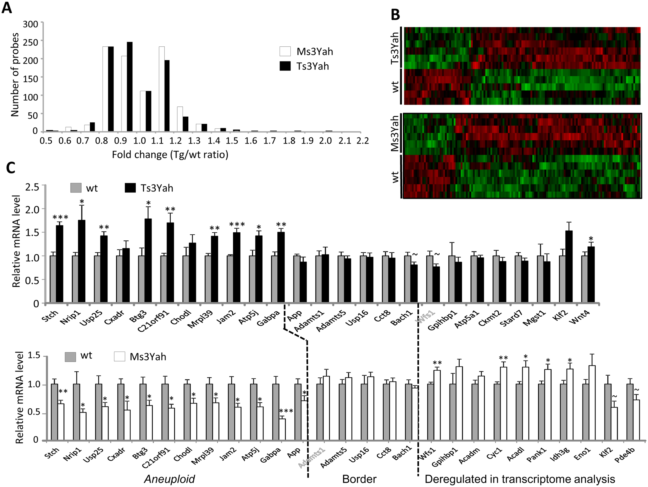 Gene expression profile of skeletal muscles from Ts3Yah and Ms3Yah transgenic mice.