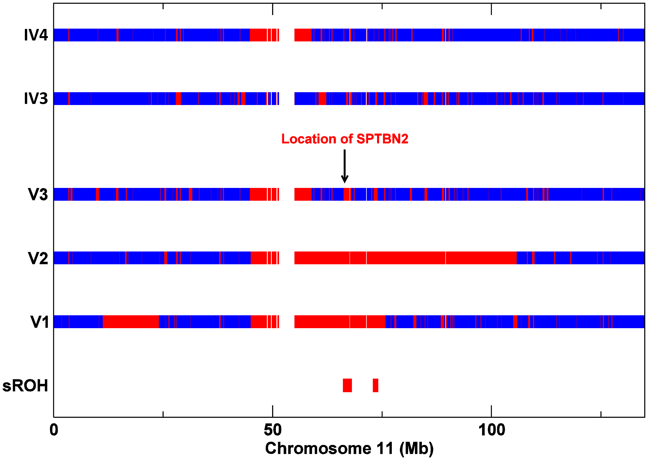 SNP Zygosity data for chromosome 11 from affecteds V1, V2, V3, and V3's parents IV3 and IV4.