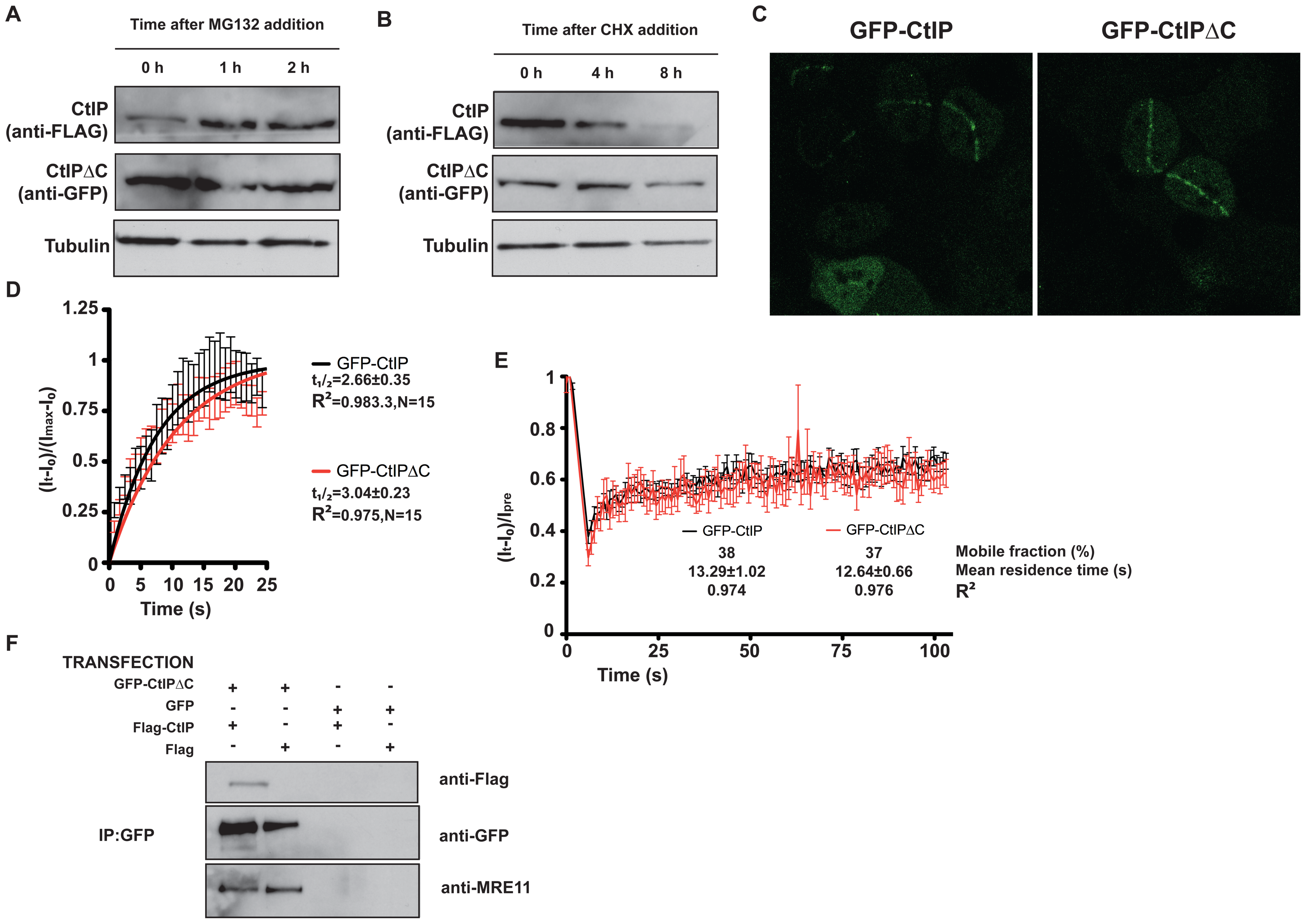 CtIPΔC acts as a dominant-negative subunit in CtIP complexes.