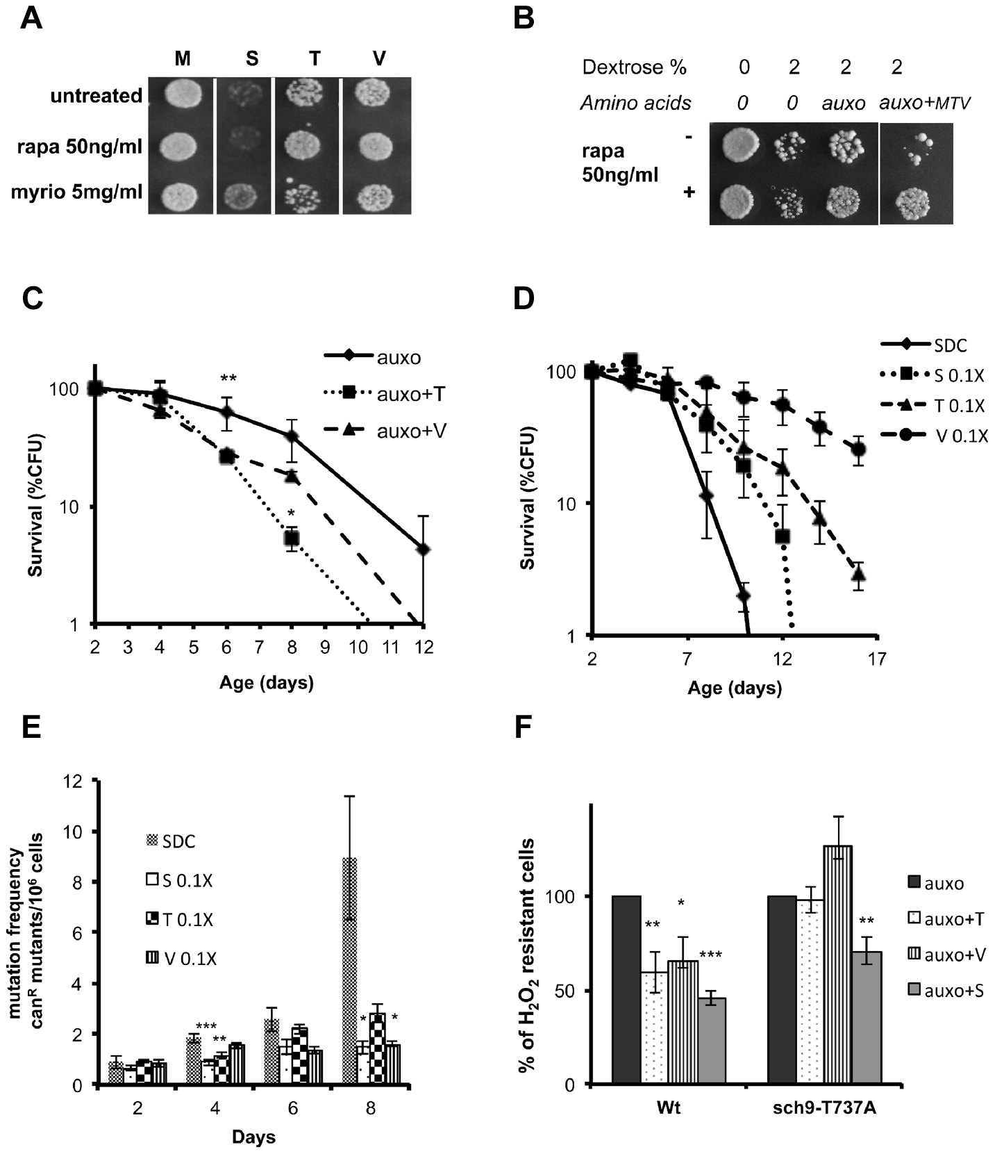 Role of Tor/S6K in amino acid response.