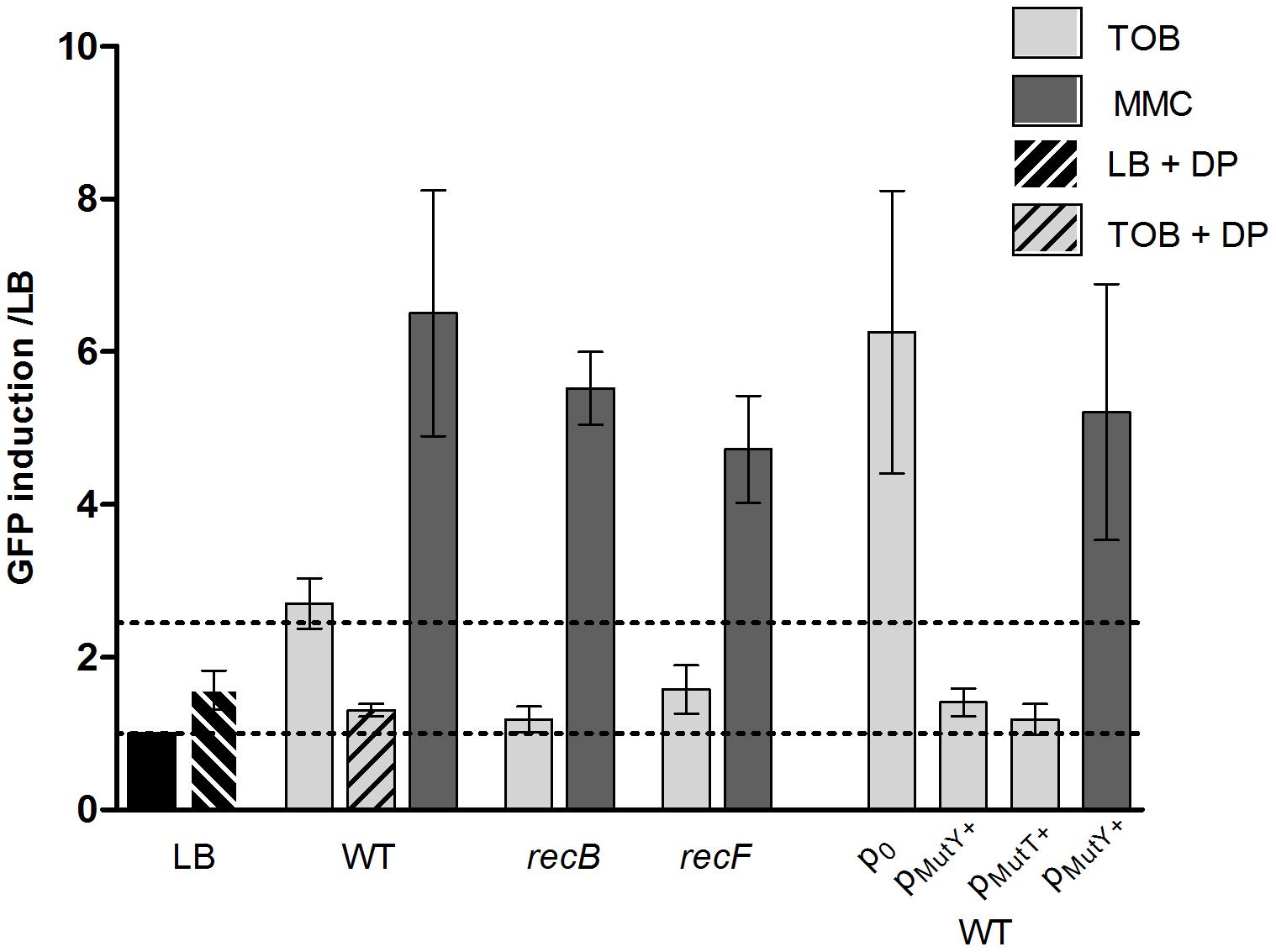 Factors modulating SOS induction by tobramycin in <i>V.</i>cholerae.