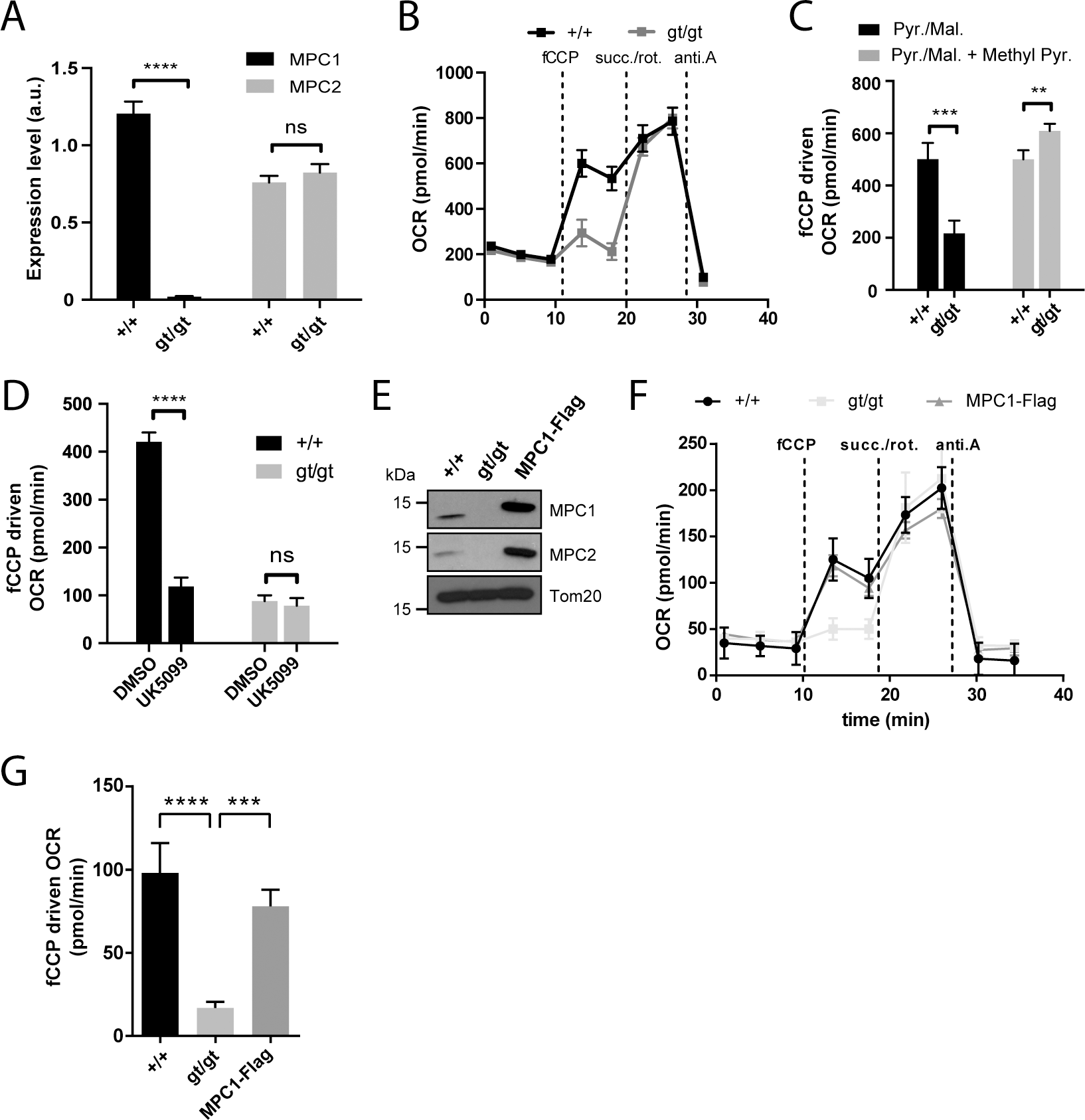 MPC1 is necessary for pyruvate-driven respiration.