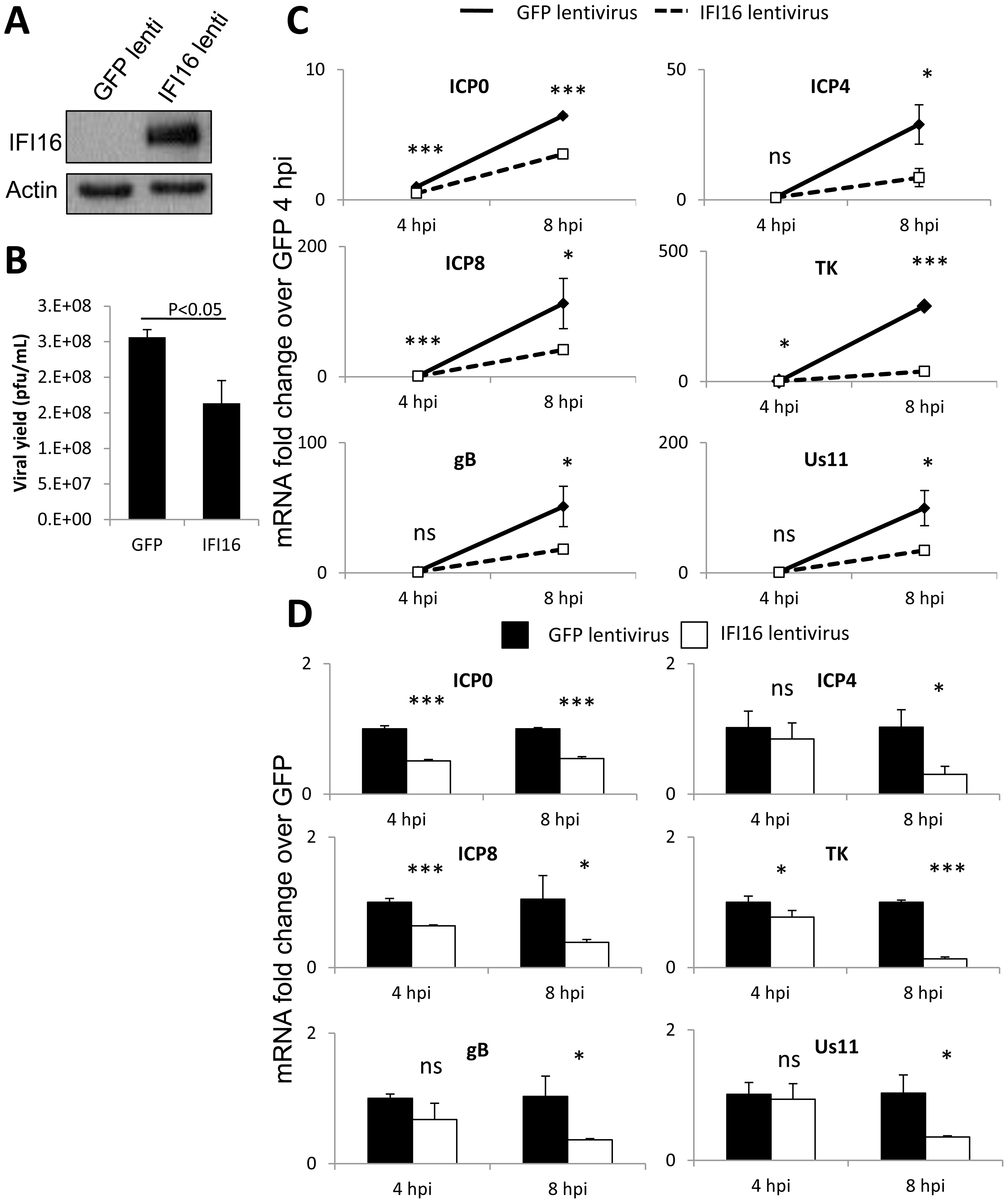 Effect of IFI16 overexpression on HSV-1 gene expression, replication and viral yield in MCF7 cells.