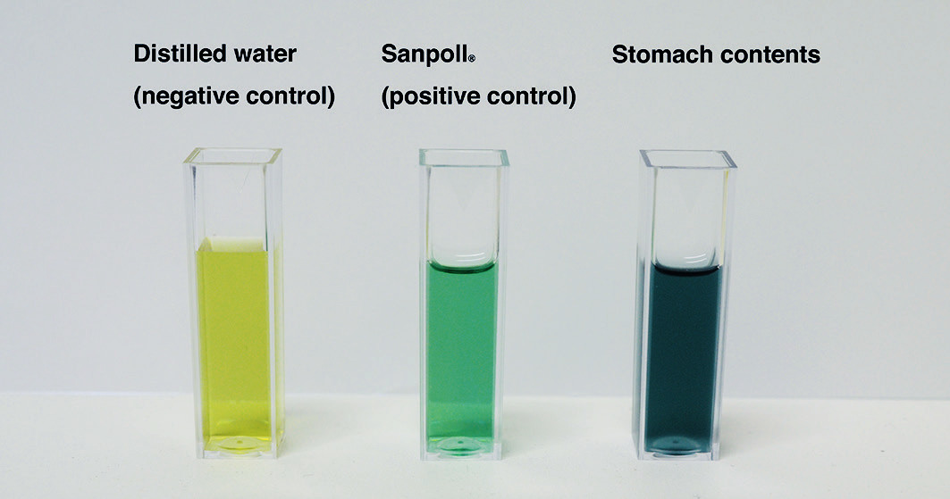 Figure 2. Color reaction test results. Negative control (left; distilled water), positive control (middle; Sanpoll<sup>®</sup>) and stomach contents (right). Both the stomach contents and Sanpoll<sup>®</sup>provided a dark green color.