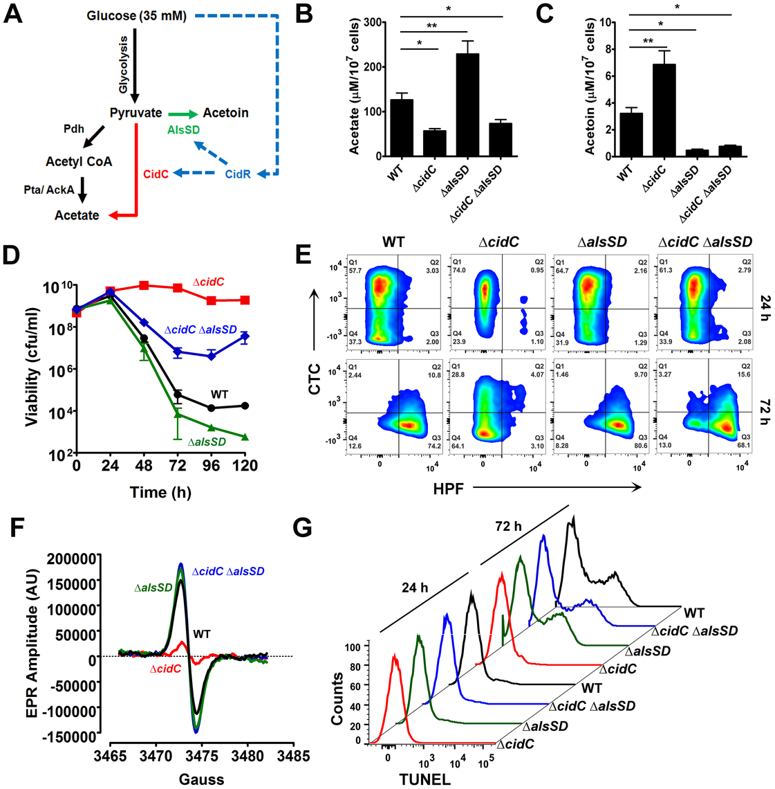 CidC and AlsSD carbon overflow pathways modulate cell death.