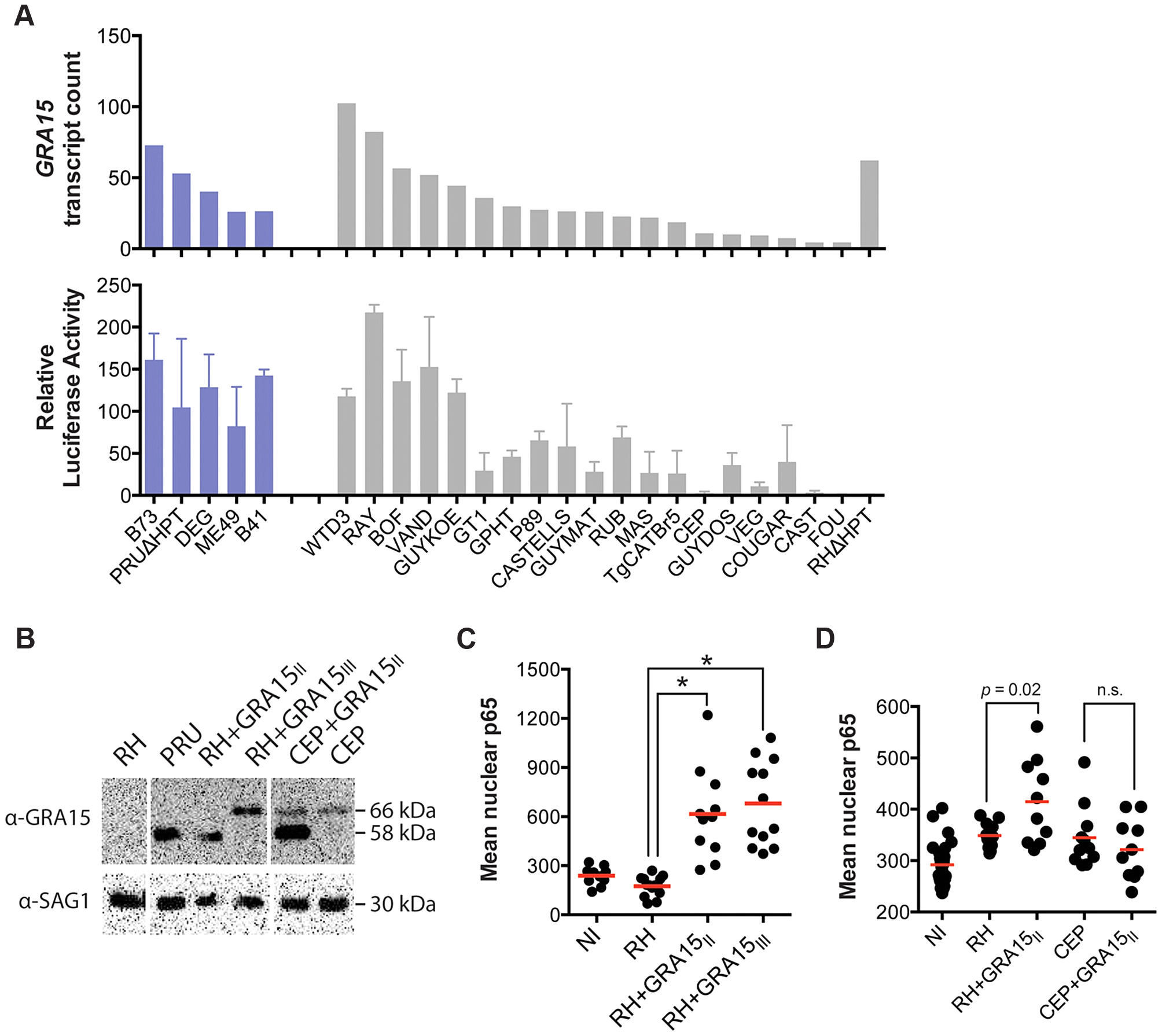 <i>Toxoplasma</i> NFκB activation depends on both the expression levels and specific allele of dense granule protein GRA15.