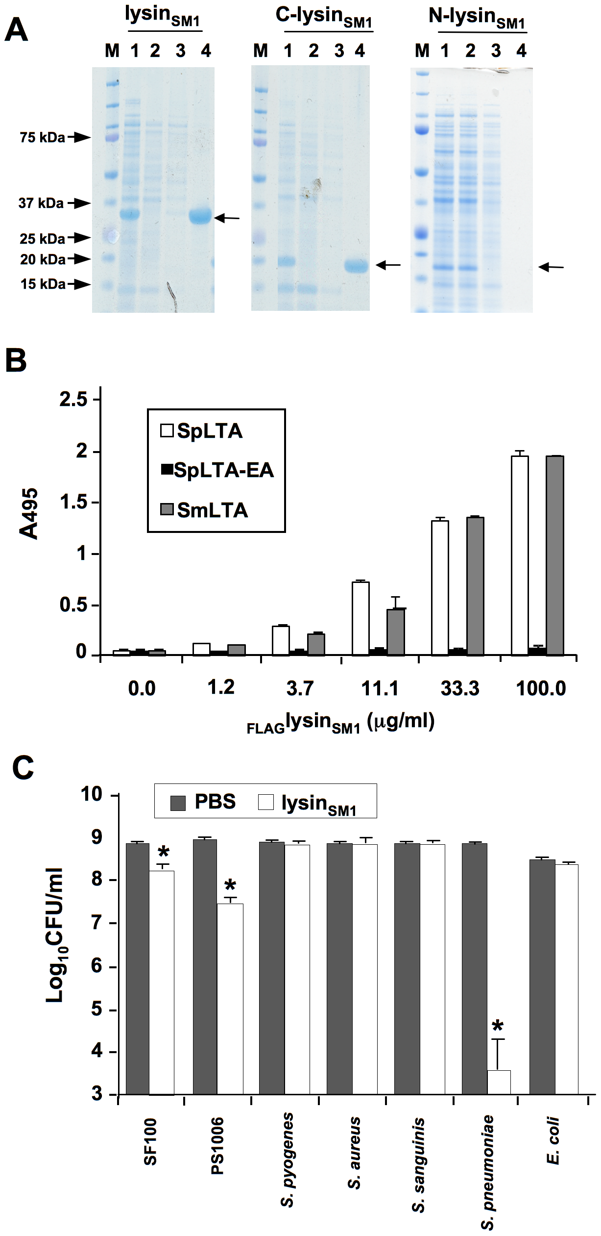 Lysin binding to phosphocholine (PC) residue and its biological activity.