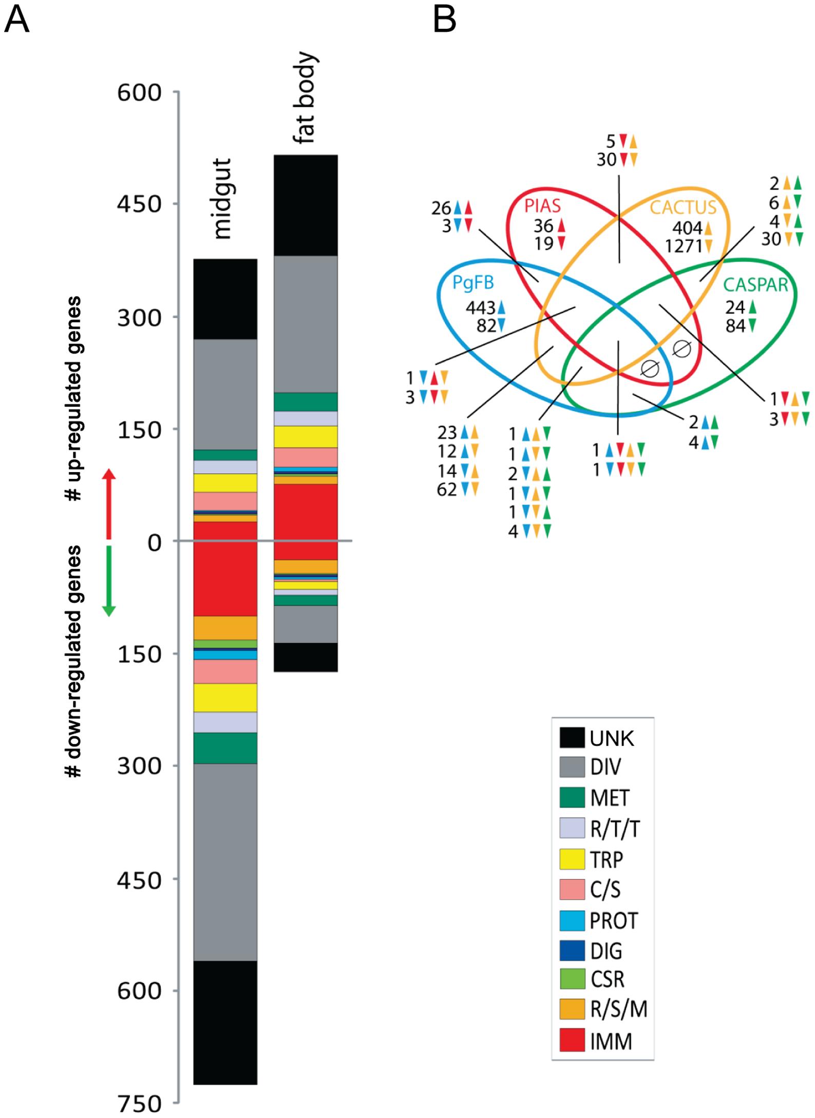 Comparative analysis <i>P. gallinaceum</i> midgut- and fat body- responsive transcriptomes.