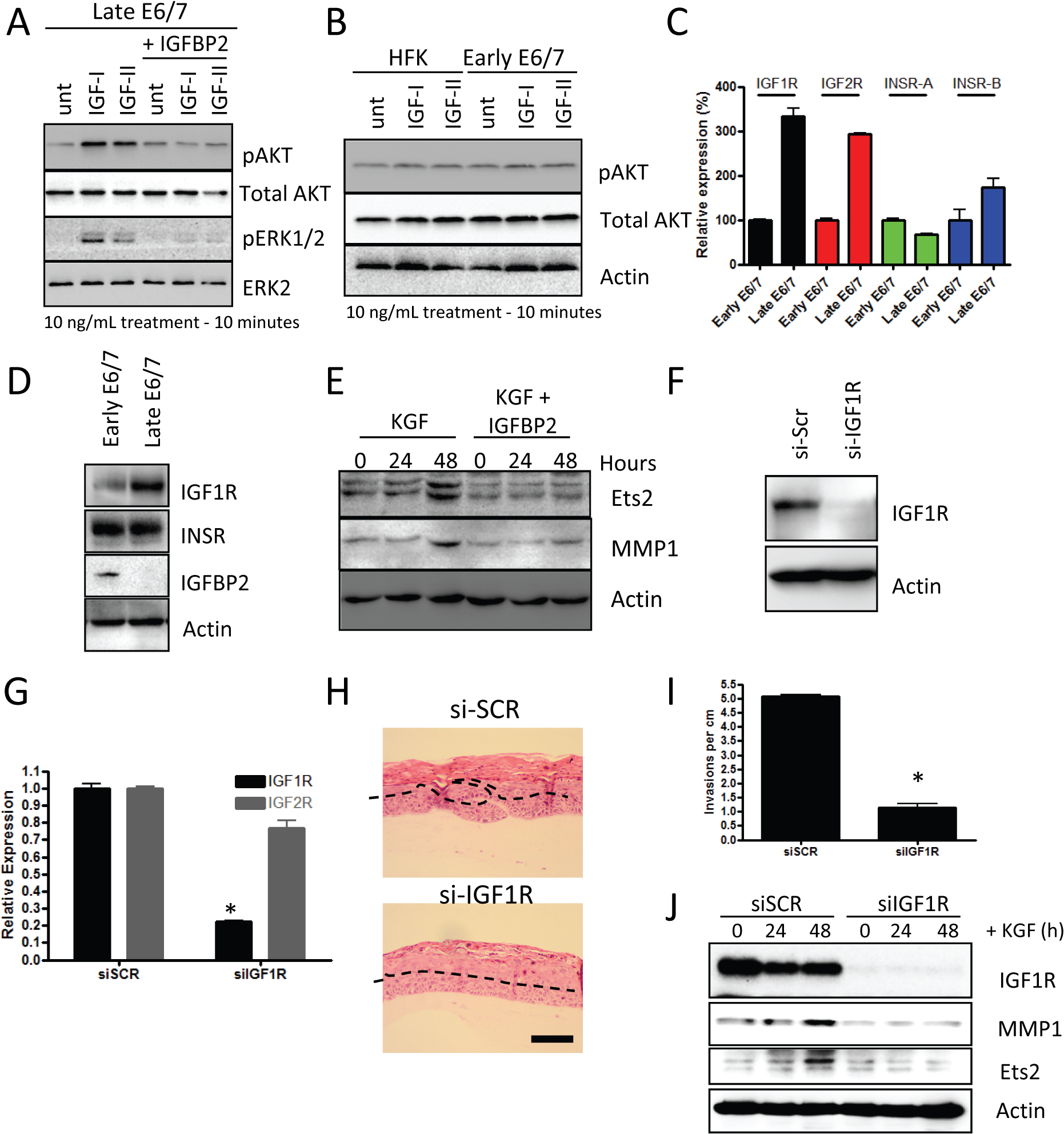 IGFBP2 blocks pro-invasive IGF1R signalling.