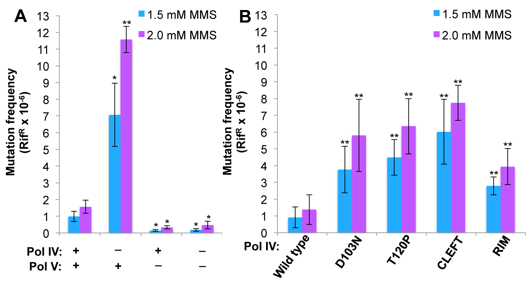 The Pol IV-T120P, Pol IV<sup>C</sup> and Pol IV<sup>R</sup> strains display an increased frequency of MMS-induced mutagenesis.