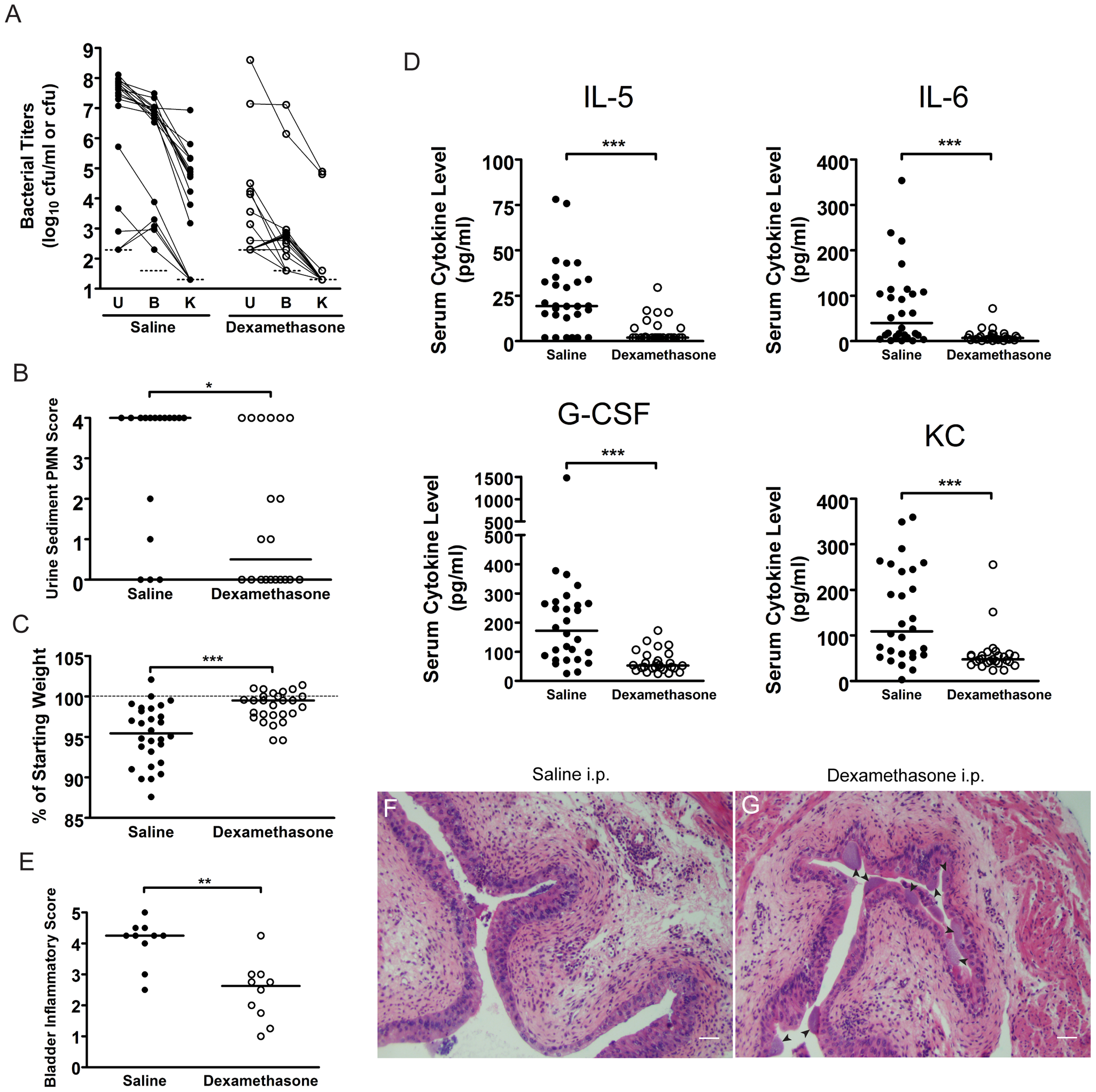 C3H mice treated with the glucocorticoid anti-inflammatory drug, dexamethasone, just prior to infection have muted acute inflammatory responses to UPEC infection and are protected against chronic cystitis.