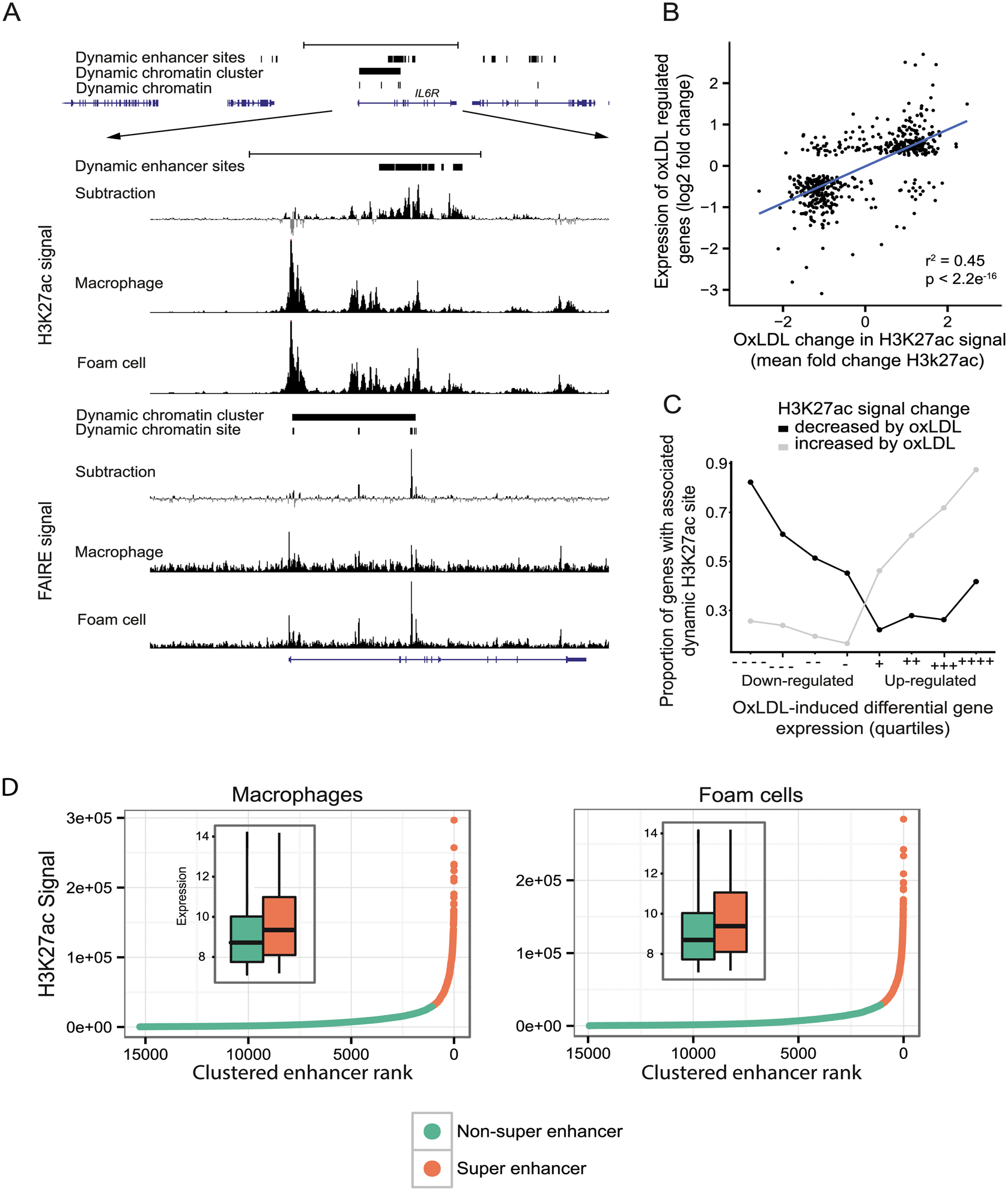 OxLDL-regulated dynamic enhancer signals correlate with expression changes in local genes.