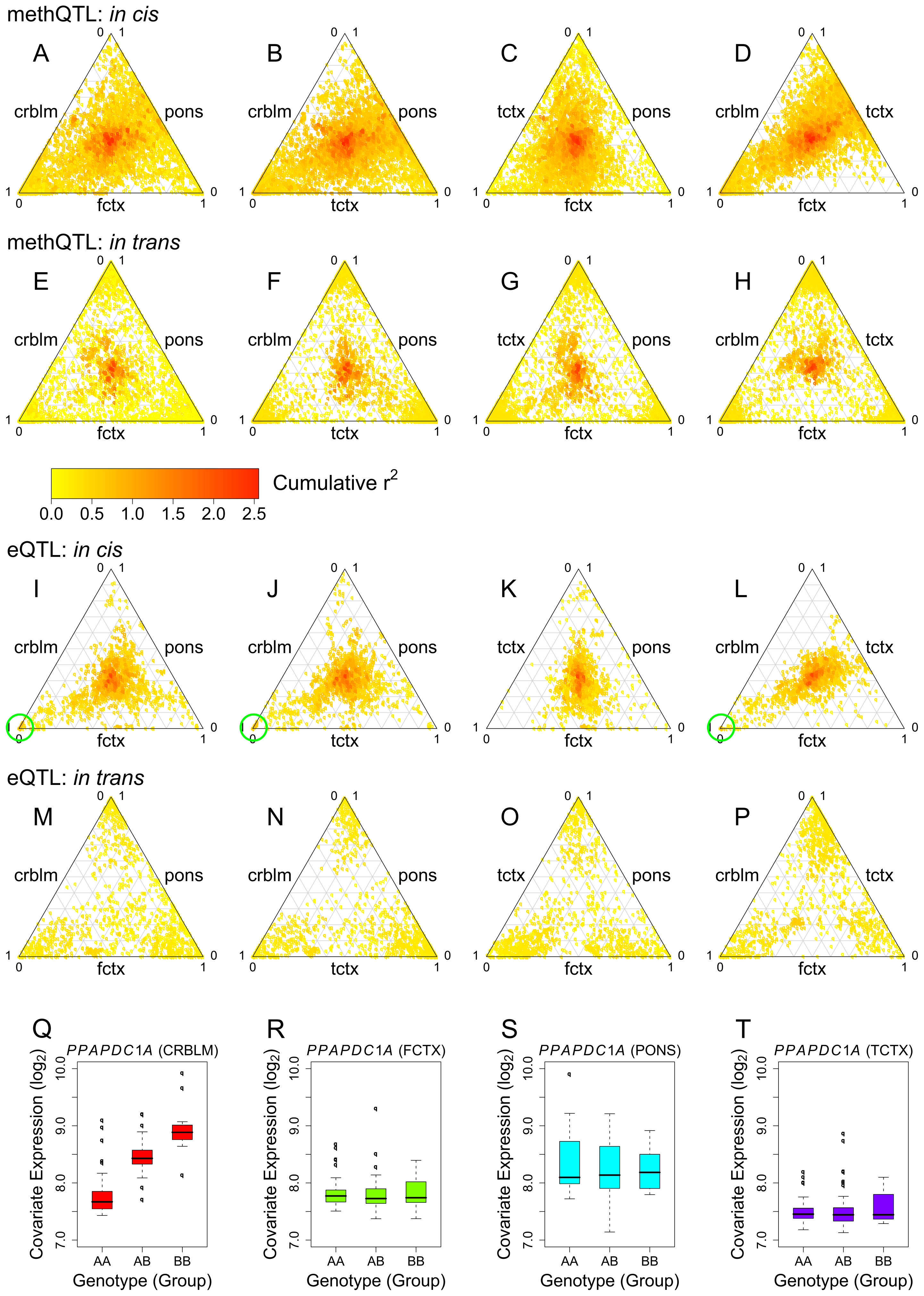 Comparison of QTLs for CpG methylation and mRNA expression across tissue regions.