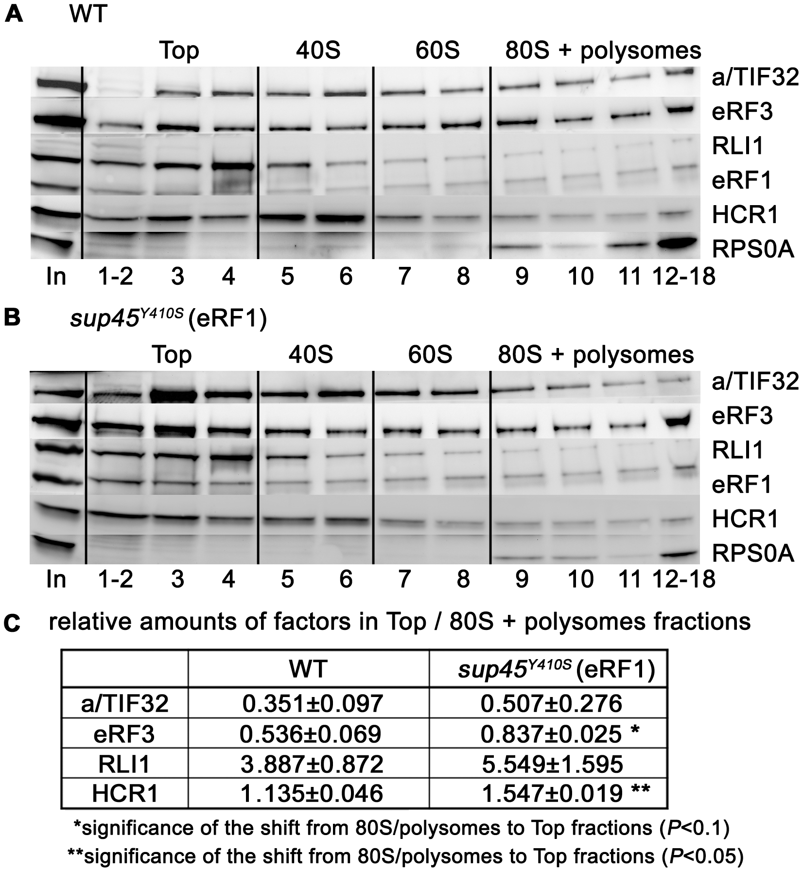The <i>sup45<sup>Y410S</sup></i> mutation prevents stable association of eRF3 and HCR1 with polyribosomes.