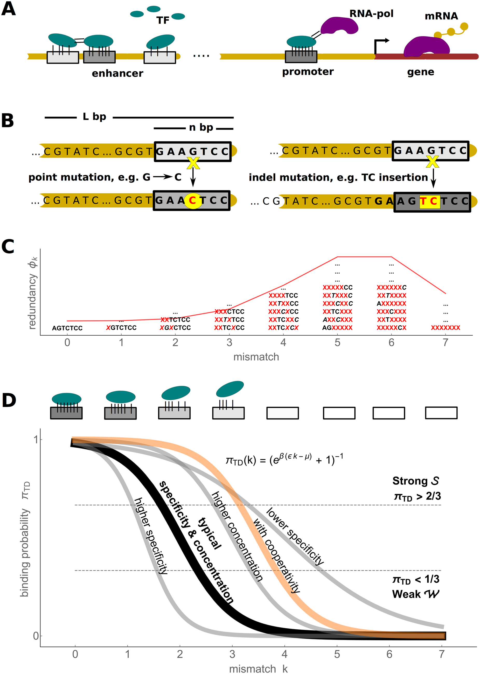 Biophysics of transcription regulation.