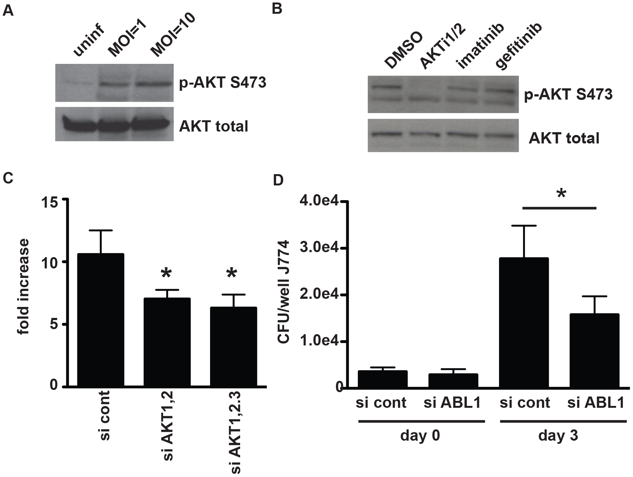 AKT and ABL are important for mycobacterial infection of macrophages.
