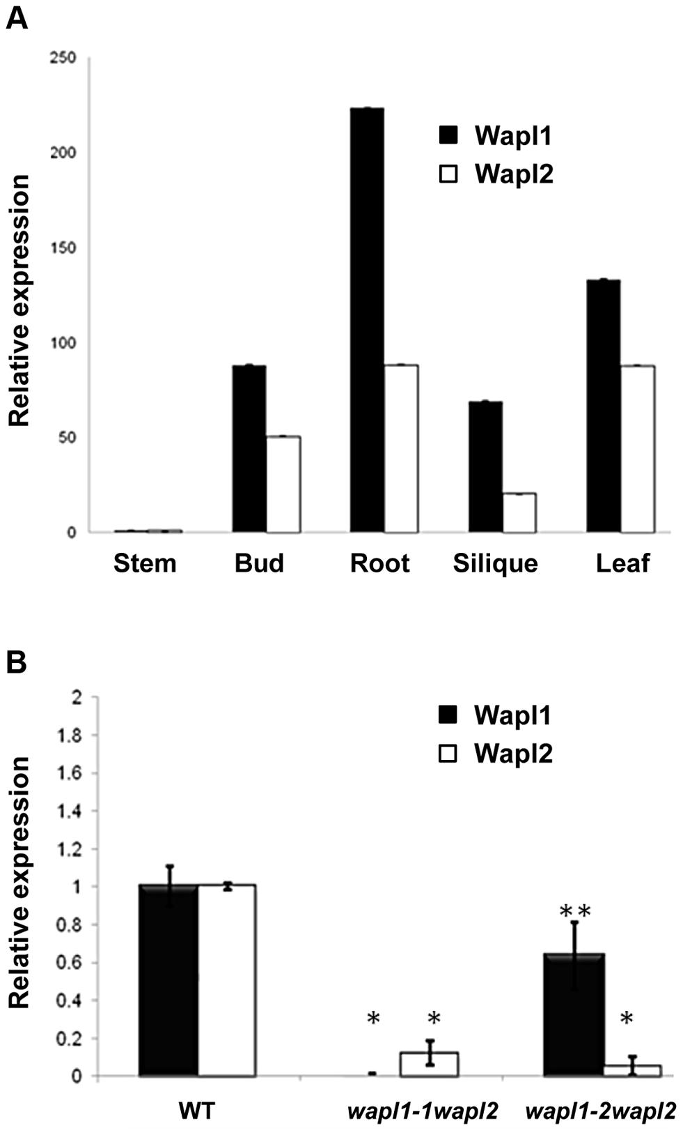 <i>AtWAPL1</i> and <i>AtWAPL2</i> show similar expression patterns.