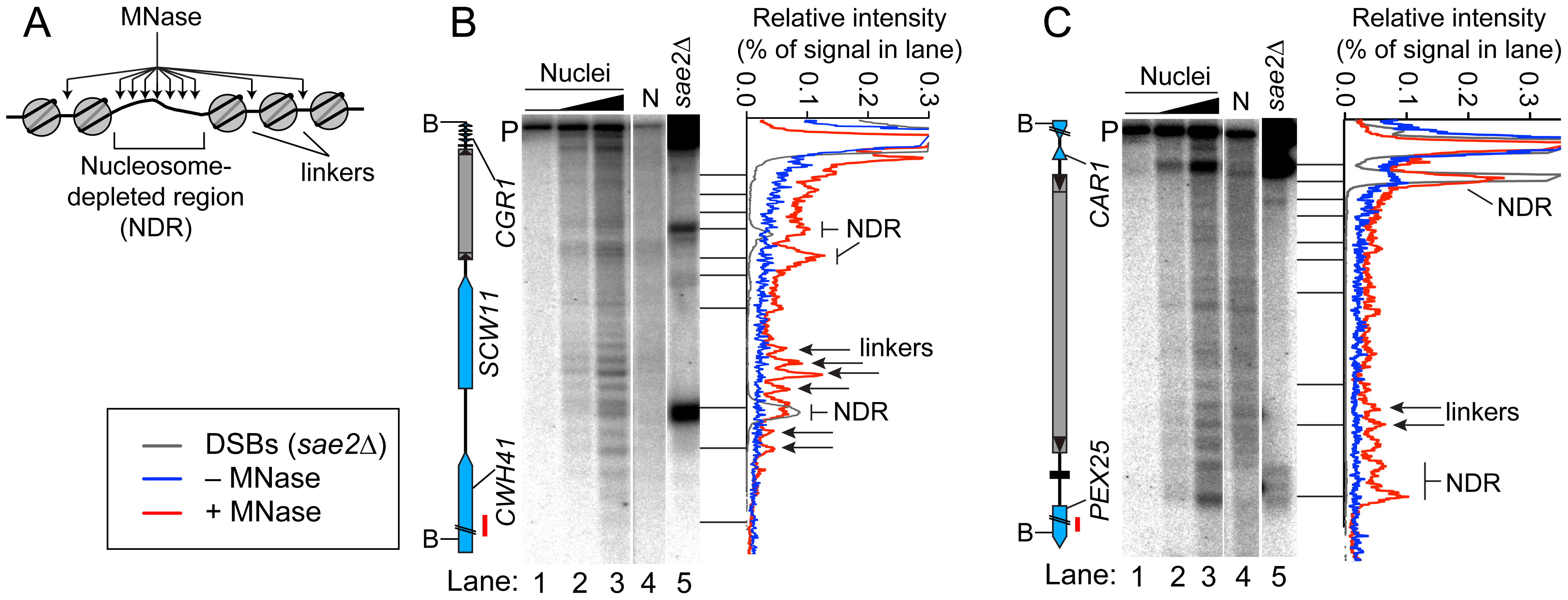 Chromatin structures of Ty elements.
