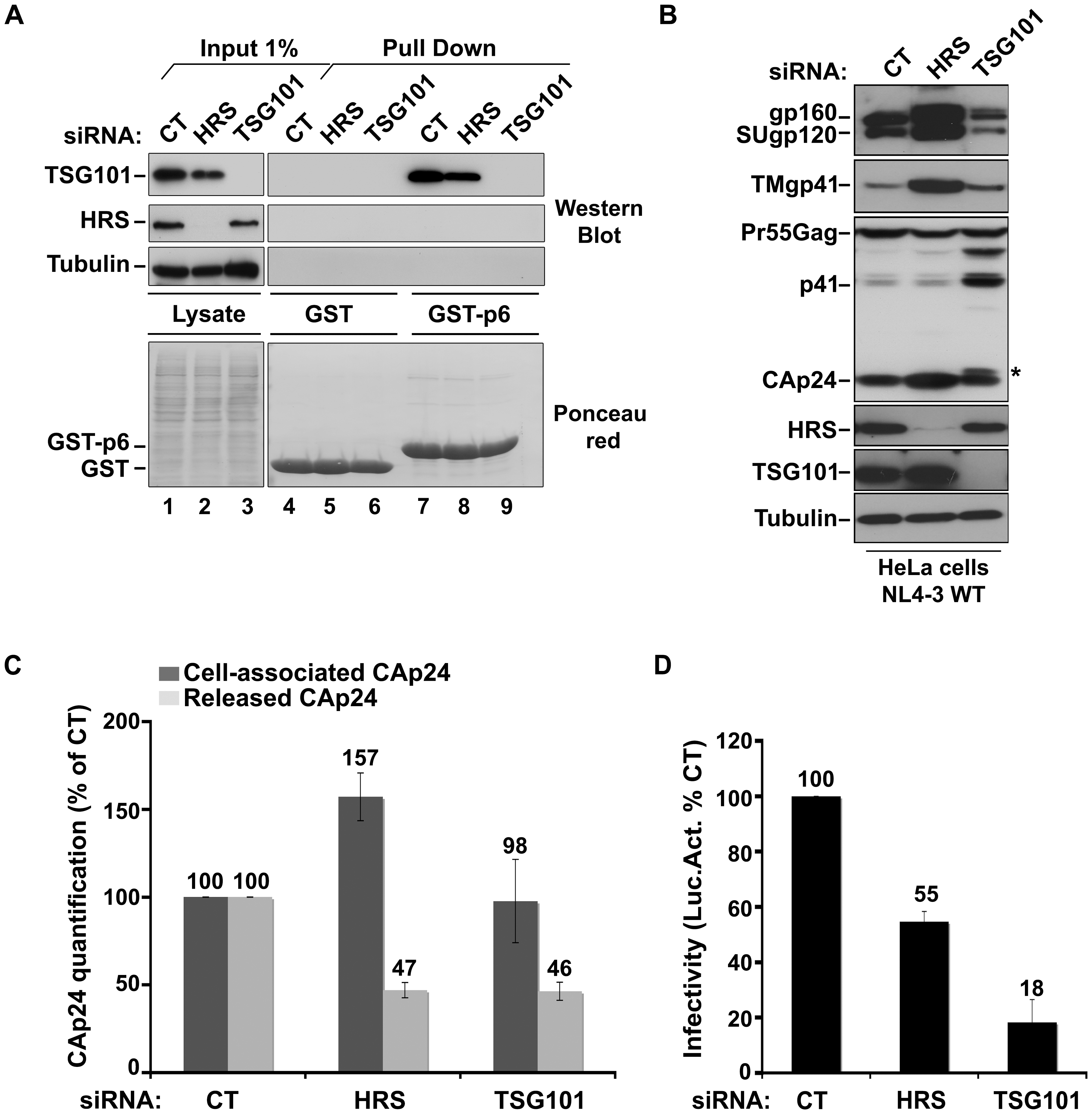HRS depletion does not interfere with TSG101-mediated budding of HIV-1.