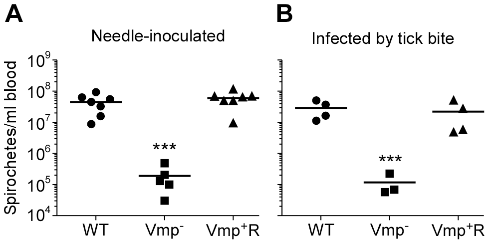 The spirochetemic levels of the Vmp<sup>−</sup> mutant are significantly less than wild-type and Vmp<sup>+</sup>R strains.