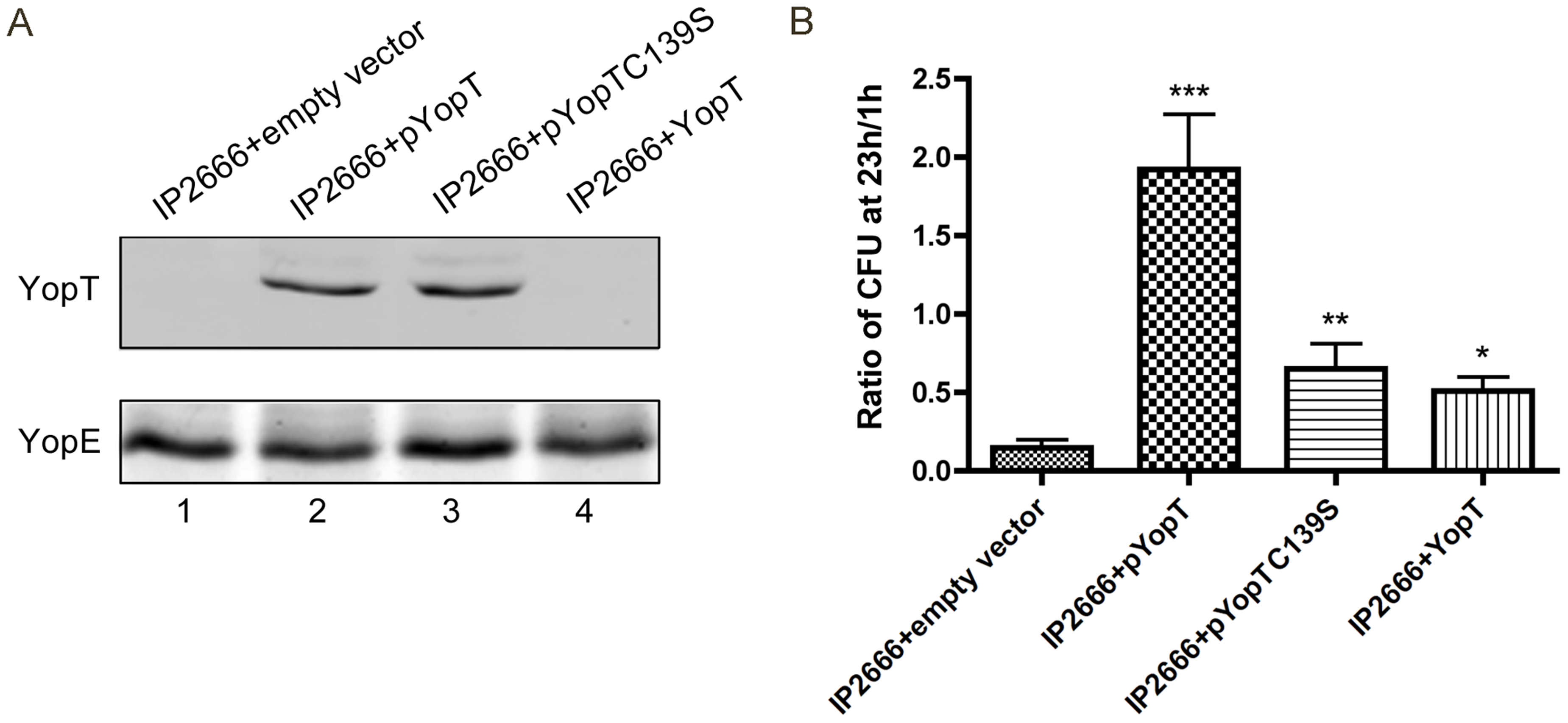 Measurement of YopT production and survival in macrophages by different <i>Y. pseudotuberculosis</i> strains.