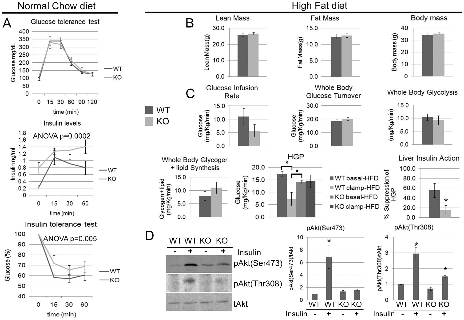 <i>Cpeb1</i> KO mice are insulin-resistant.