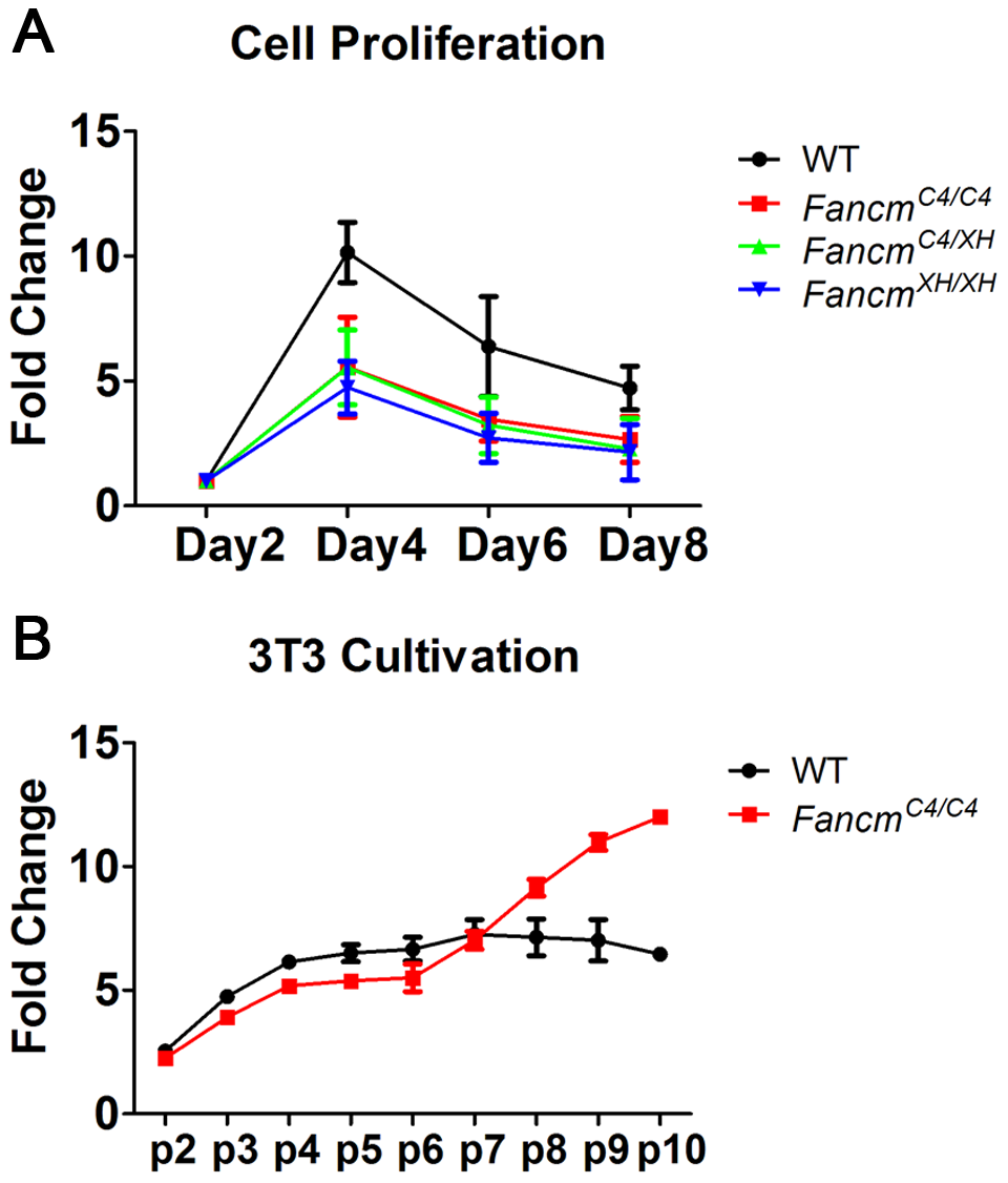 <i>Fancm<sup>C4/C4</sup></i> MEFs undergo premature senescence, but are not sensitive to interstrand crosslinks.