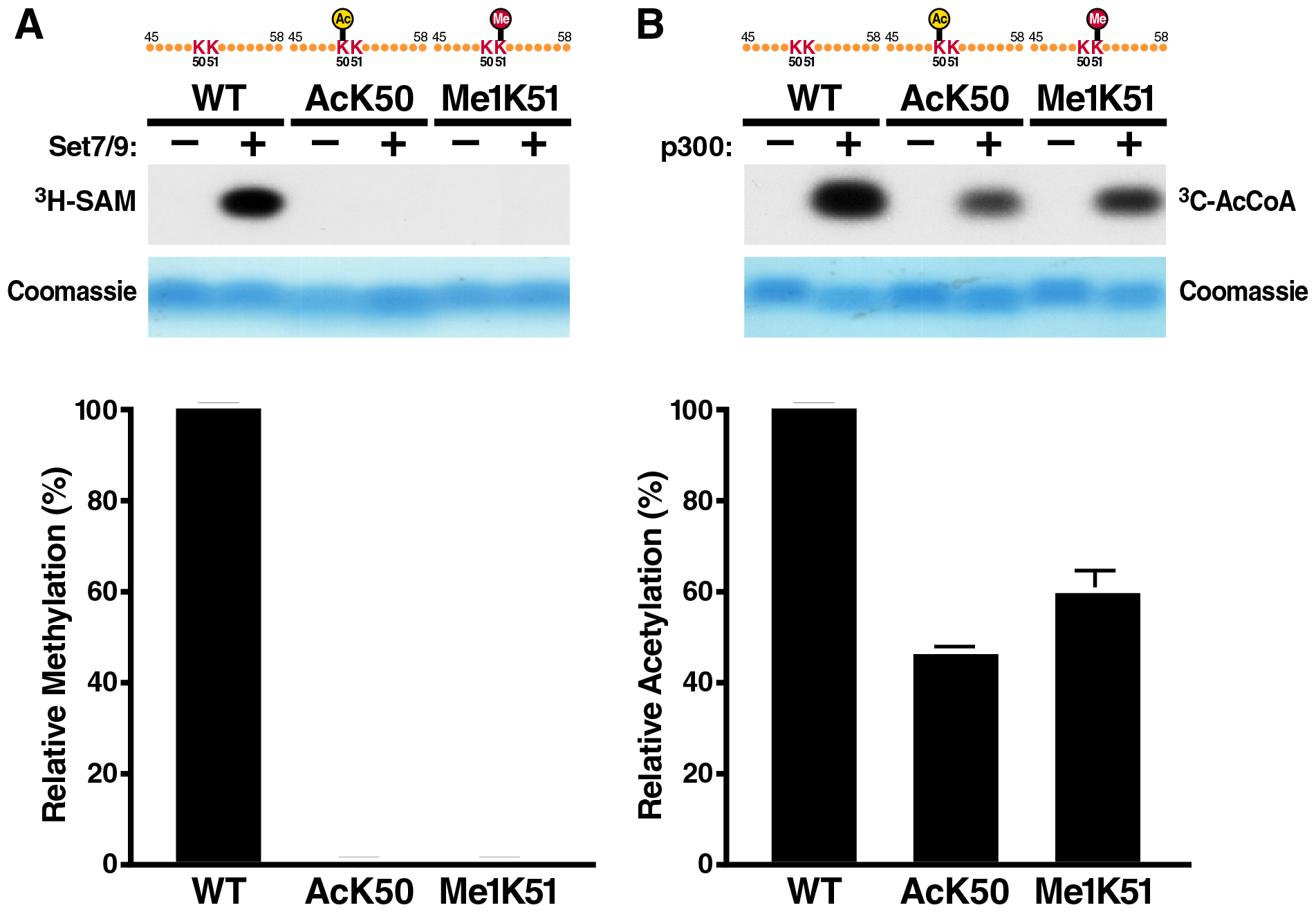 <i>In vitro</i> acetylation and methylation assays using synthetic Tat peptides.
