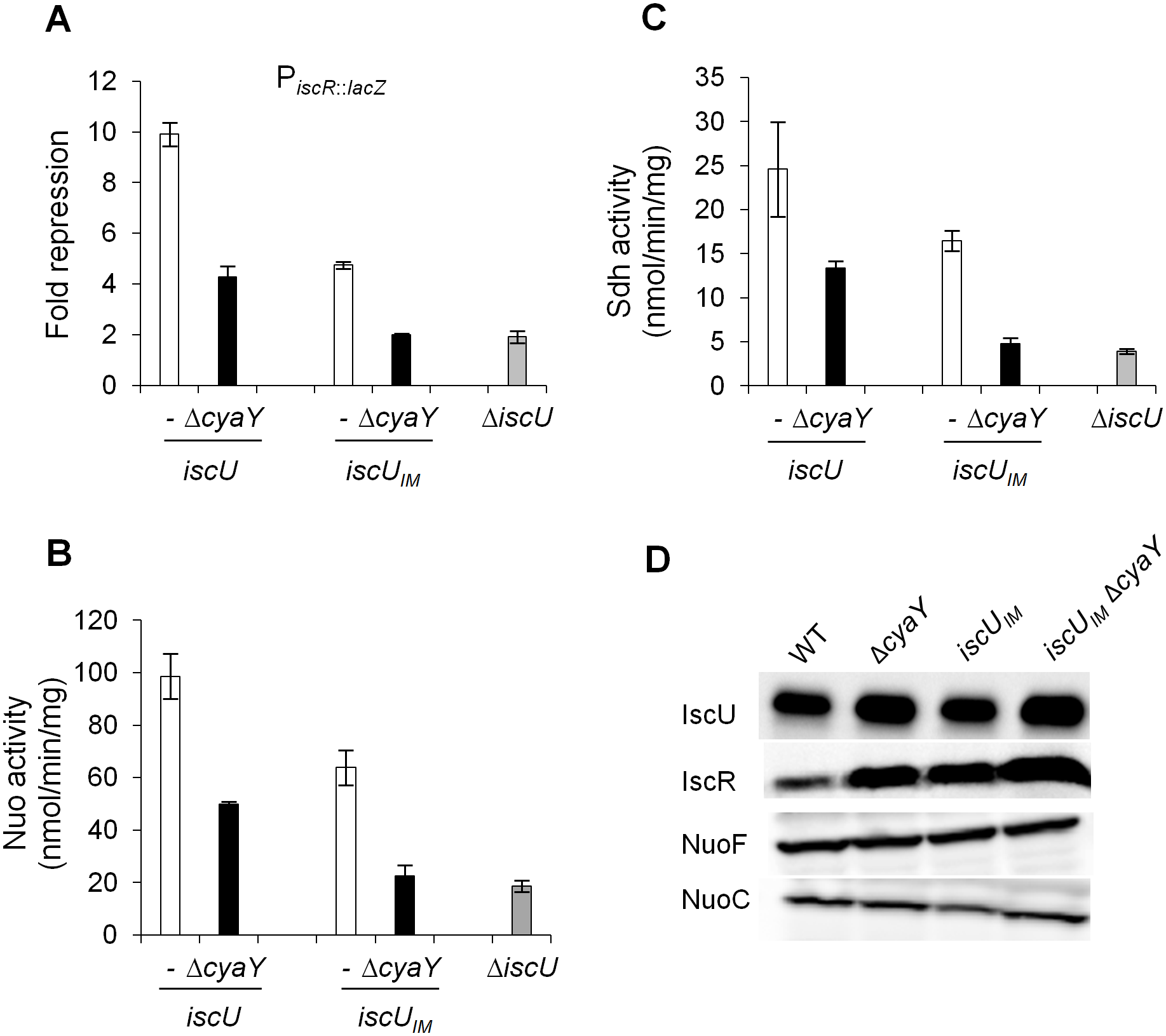 Activities of Fe-S proteins in <i>iscU</i><sub><i>IM</i></sub> and Δ<i>cyaY</i> strains.
