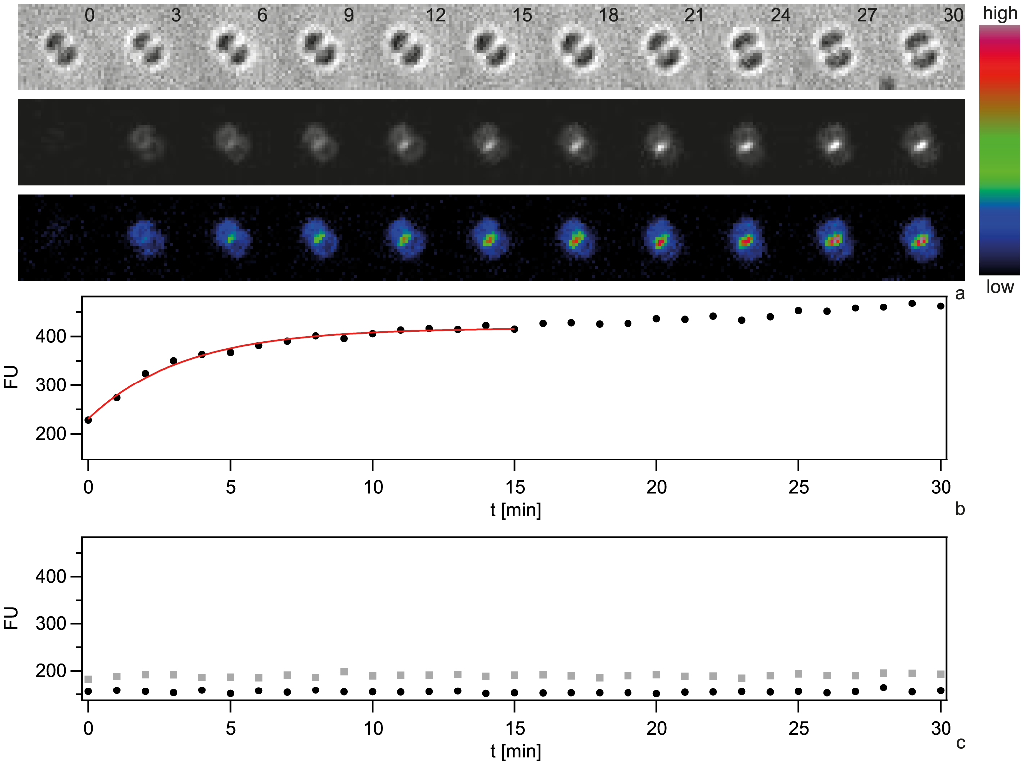 Dynamics of focus formation (<i>ΔpilV</i>) with 300 bp fragments of Cy3-DNA.