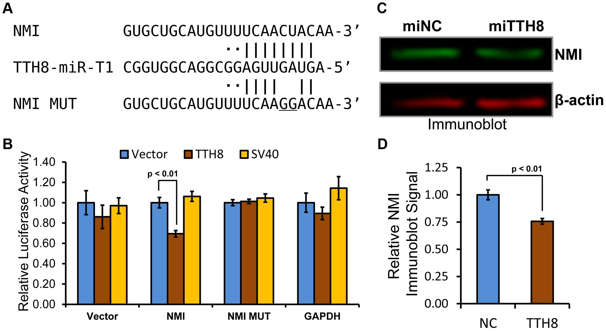 Host antiviral gene NMI is a direct target of TTV-tth8-miR-T1.