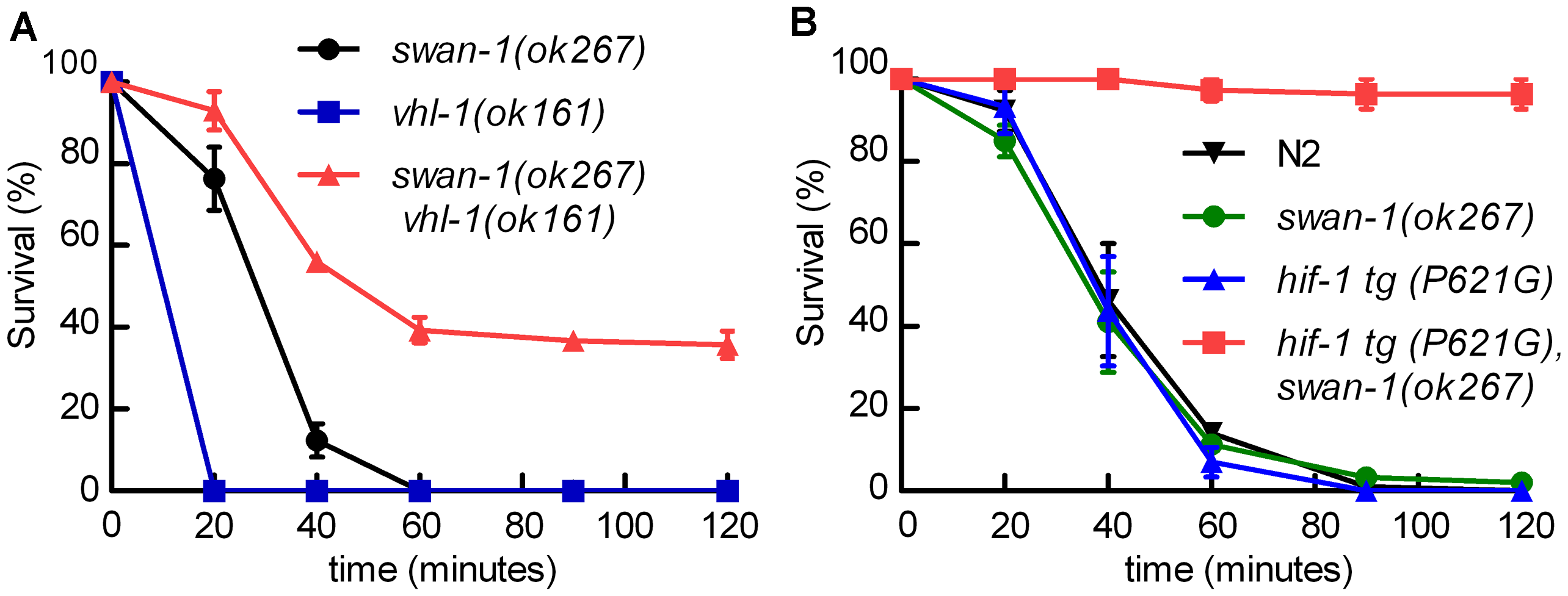The <i>swan-1 (ok267), vhl-1 (ok161)</i> double mutant is more resistant to <i>P. aeruginosa</i> PAO1 fast killing than either single mutant.