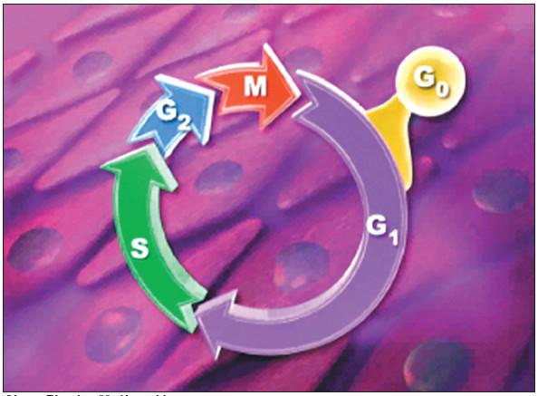 Fáze buněčného cyklu.