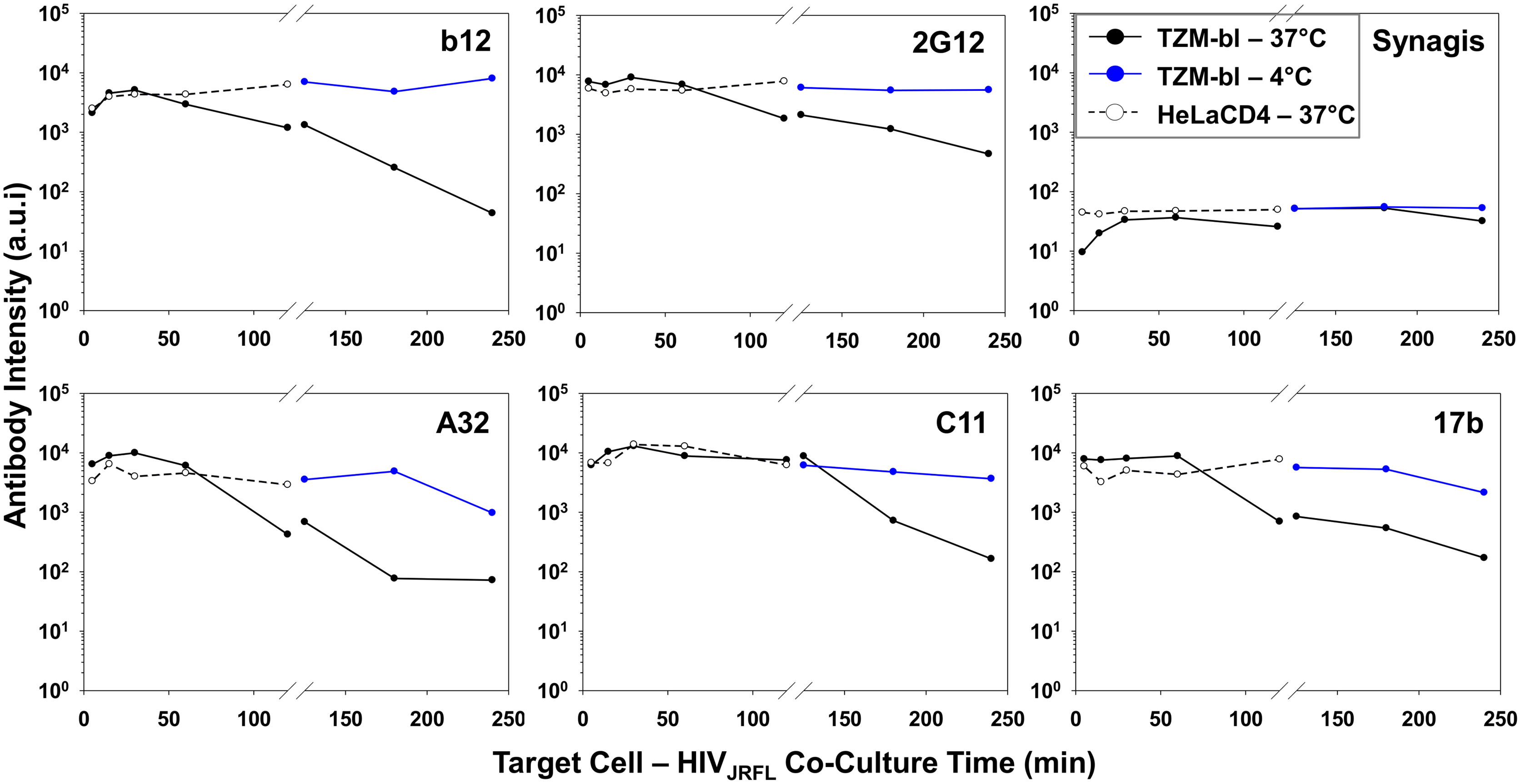 Influence of co-receptor expression, temperature and time on the exposure of gp120 epitopes on cell-bound HIV<sub>JRFL</sub> virions.