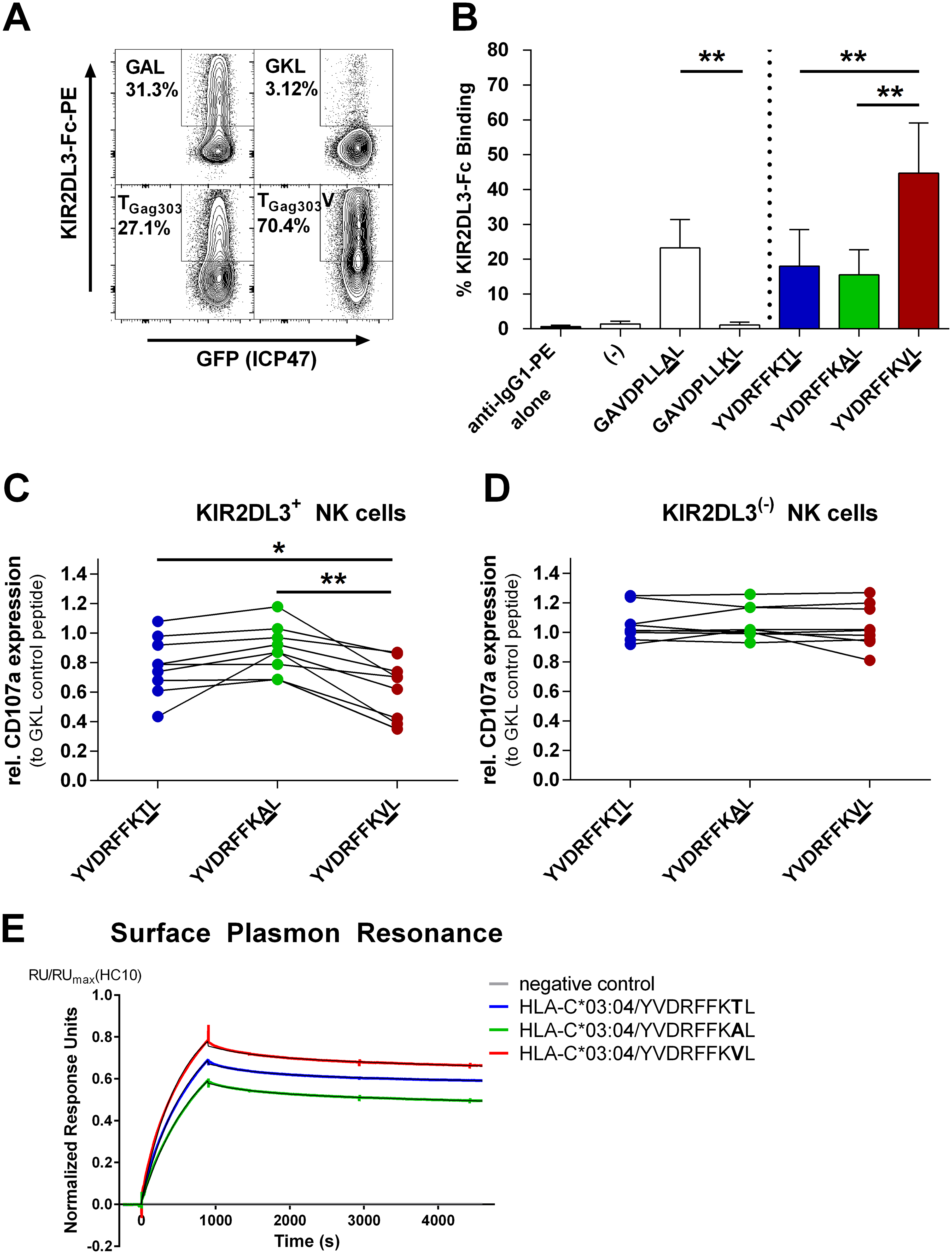 Binding of KIR2DL3-Fc and inhibition of primary KIR2DL3+ NK cells is significantly stronger when target cells are pulsed with the T<sub>Gag303</sub>V variant peptide.