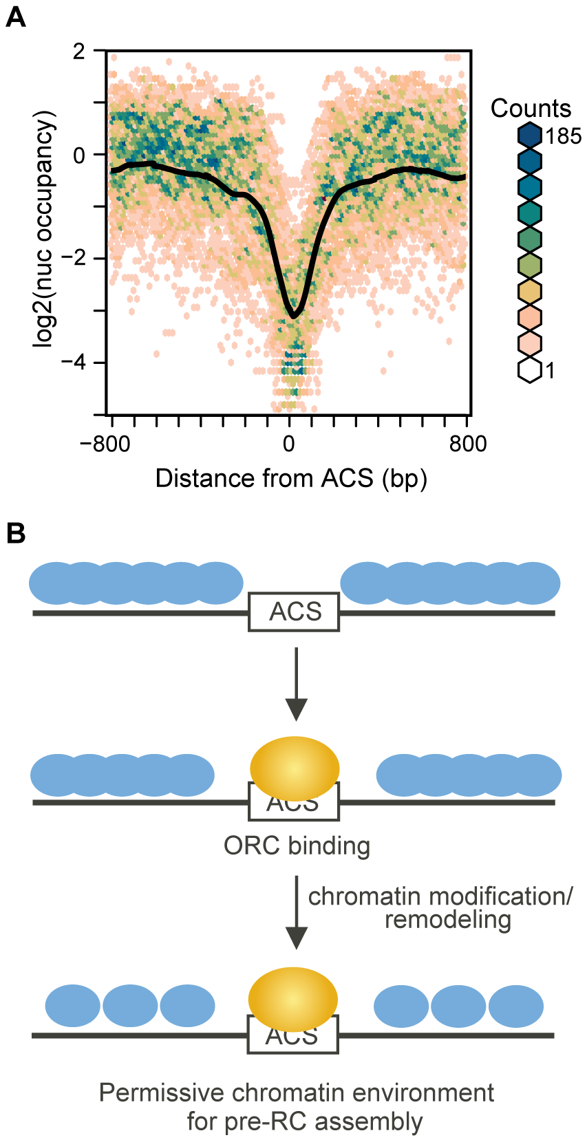 Nucleosome occupancy at replication origins in chromatin assembled <i>in vitro</i>.