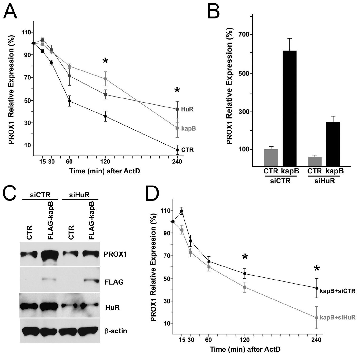 Kaposin-B upregulates PROX1 by promoting its mRNA stability through HuR.