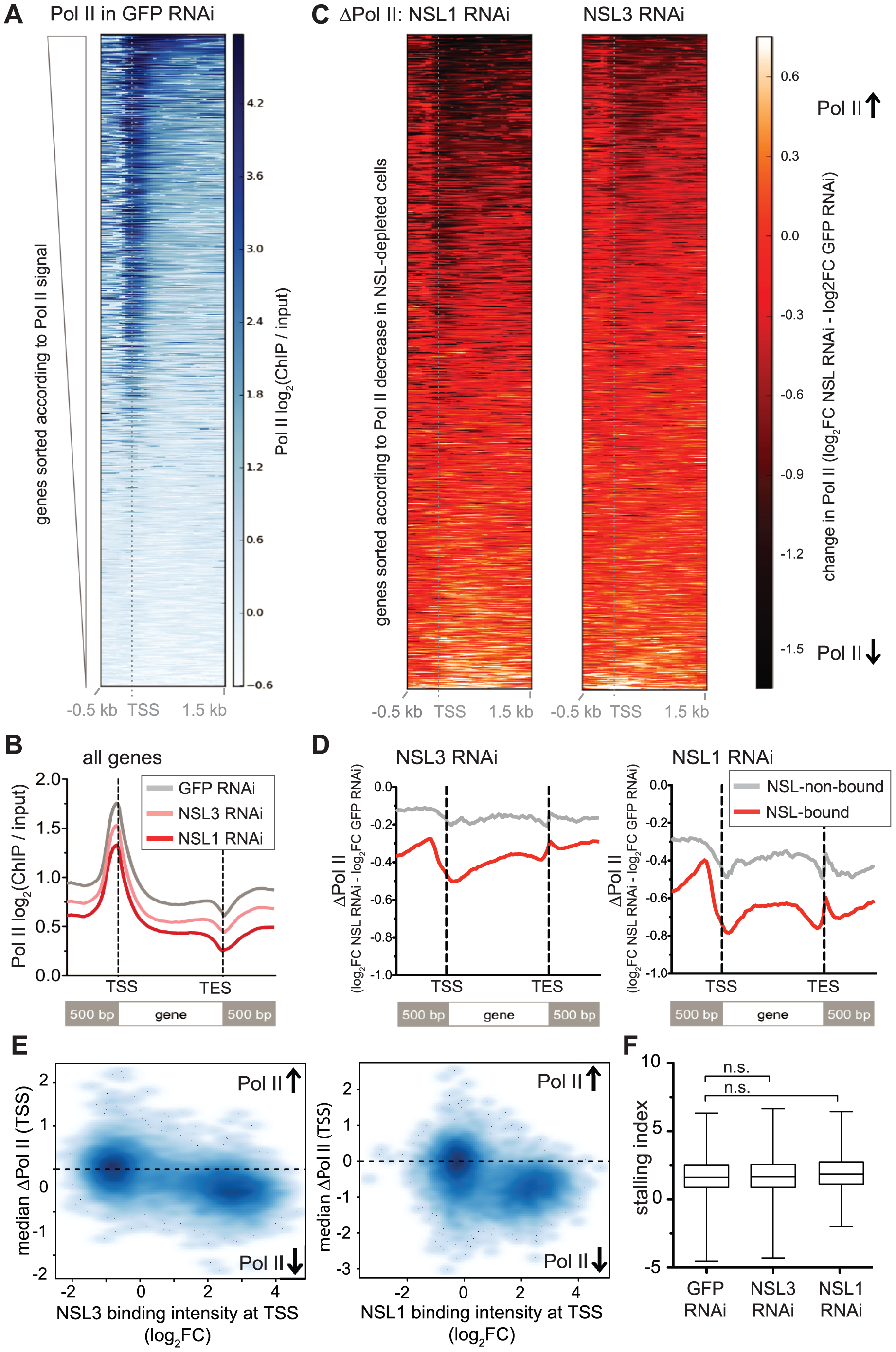 NSL depletion leads to Pol II loss on target genes of the NSL complex.