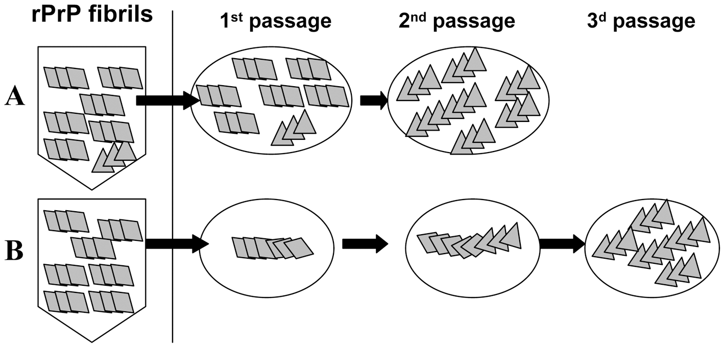 Schematic representation of two mechanisms responsible for generating transmissible prion diseases <i>de novo</i>.