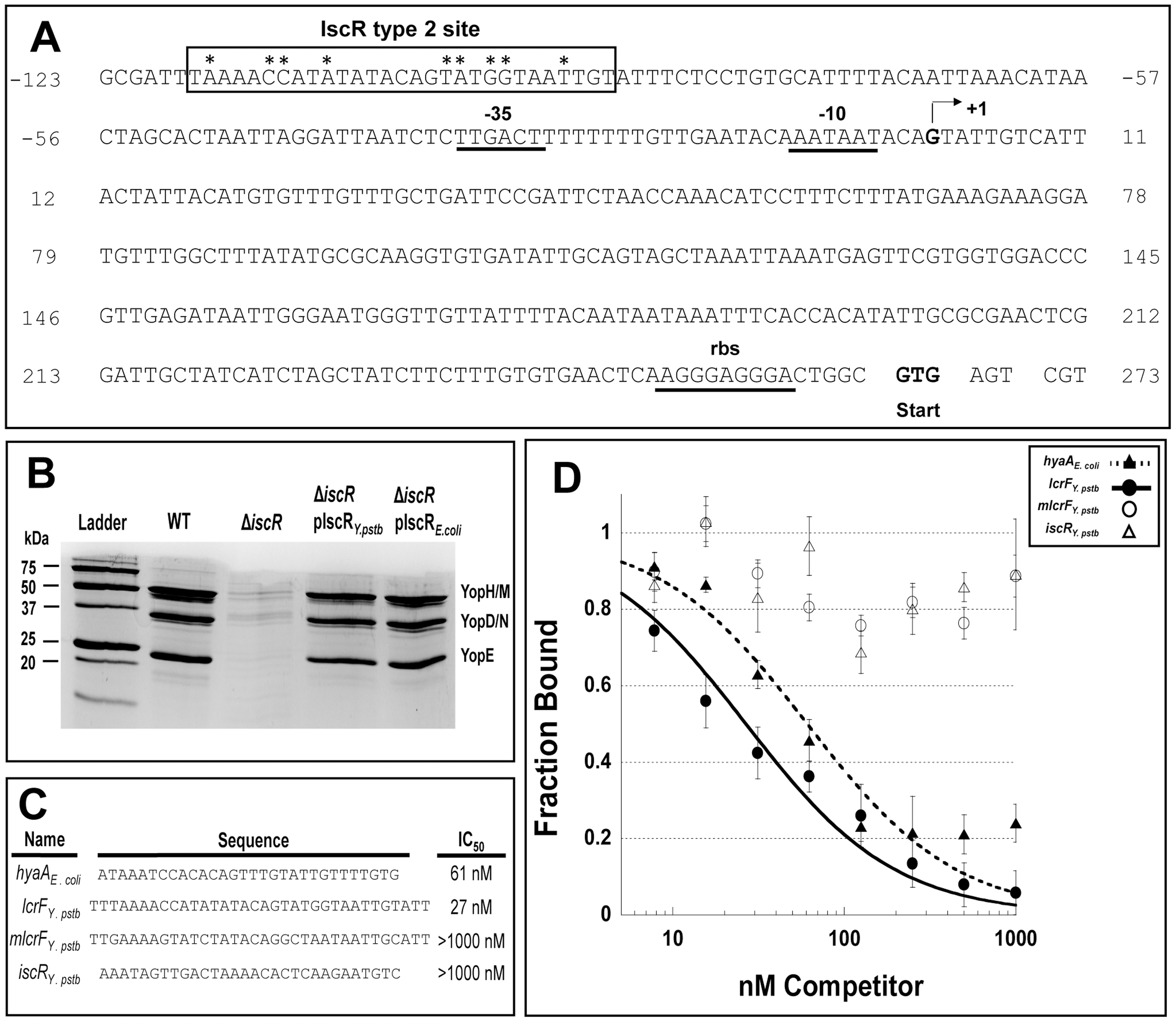 IscR binds a novel motif 2 site within the <i>lcrF</i> promoter region.
