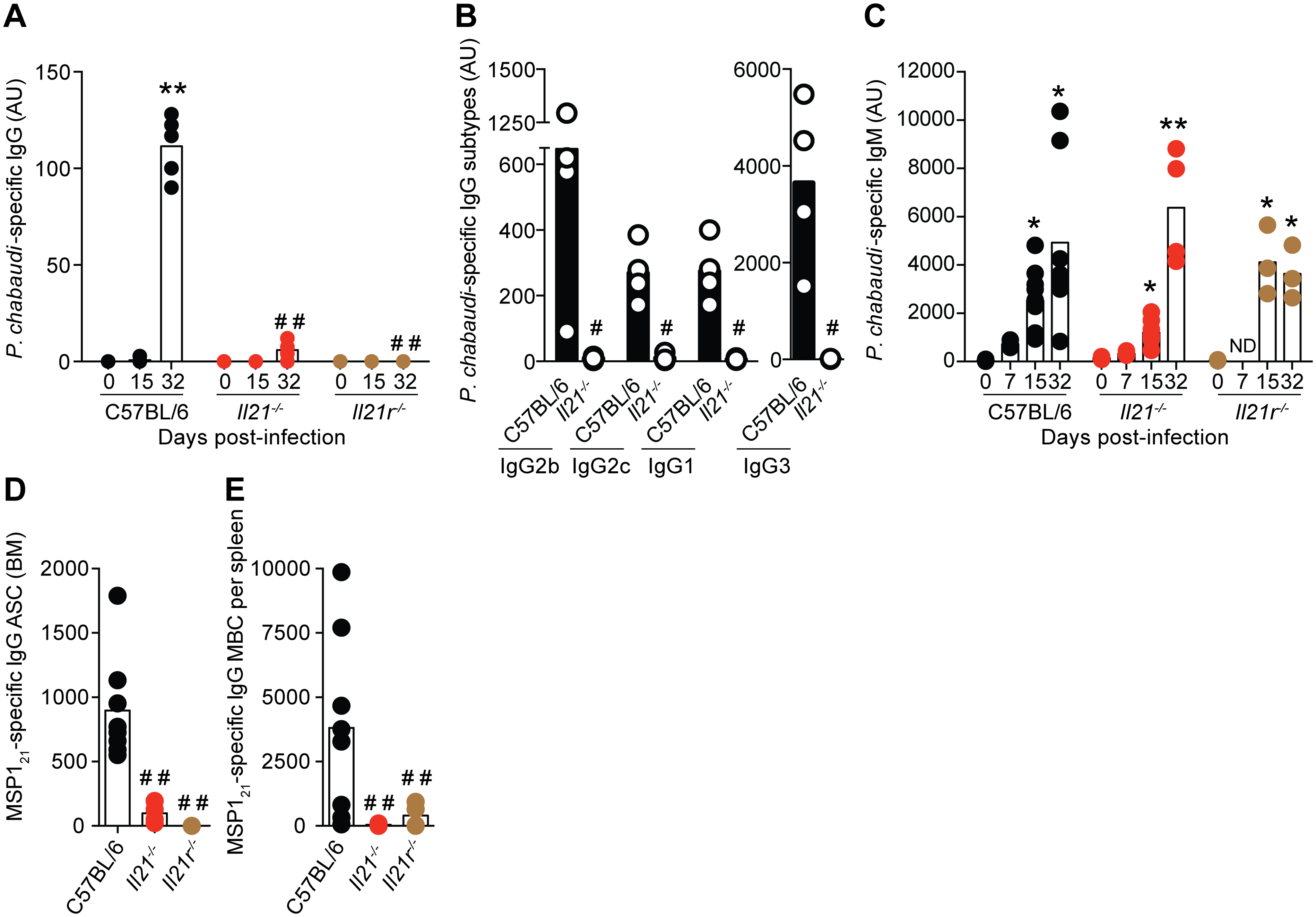 <i>P</i>. <i>chabaudi</i>-specific IgG B-cell responses are abrogated in the absence of IL-21 signaling.