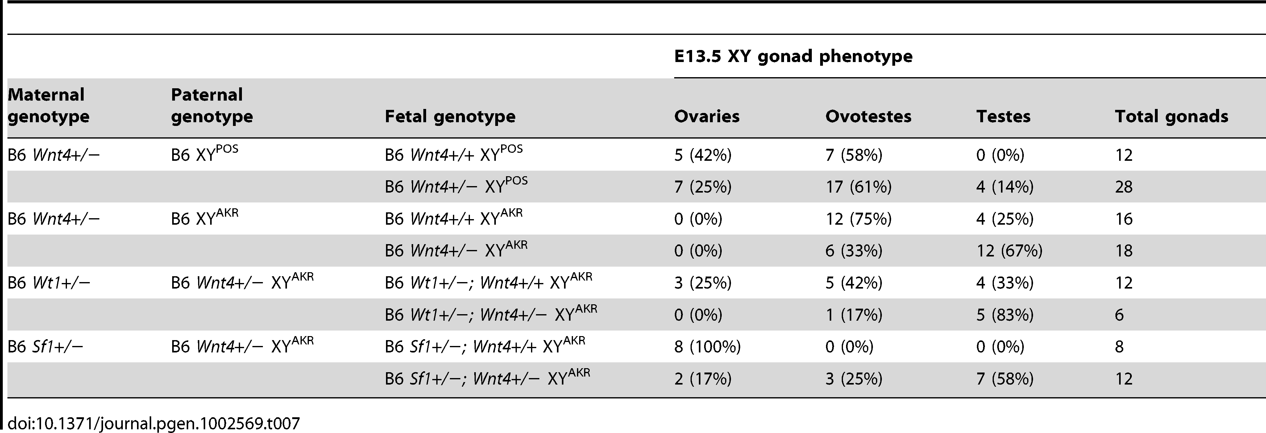 Reducing the <i>Wnt4</i> dosage partially rescues the sex reversal phenotypes of E13.5 B6 XY<sup>POS</sup>, B6 XY<sup>AKR</sup>, B6 <i>Wt1</i>+/− XY<sup>AKR</sup>, and B6 <i>Sf1</i>+/− XY<sup>AKR</sup> gonads.