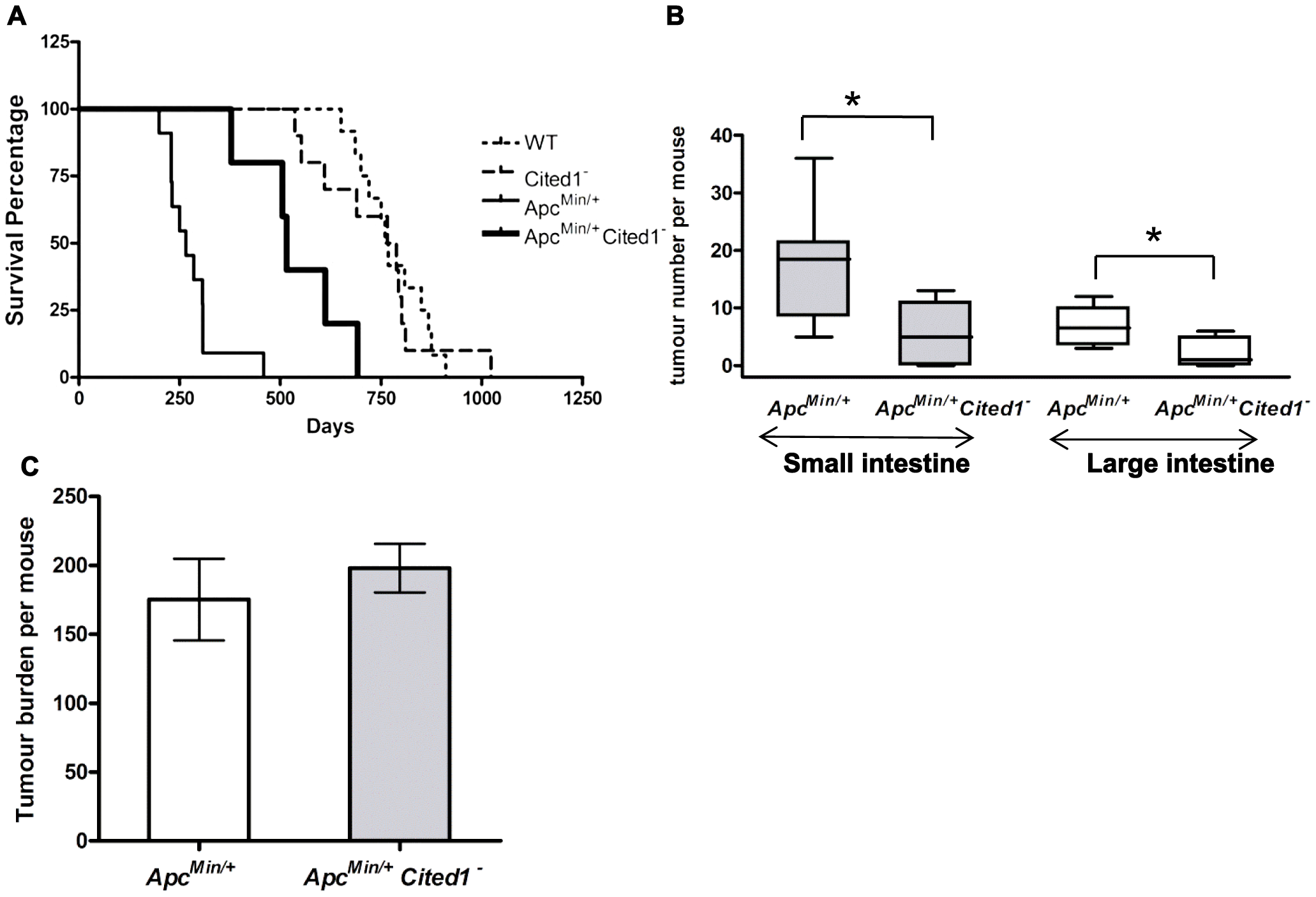 Loss of <i>Cited1</i> extends lifespan of <i>Apc<sup>Min/+</sup></i> mice and reduces the number of intestinal adenomas.