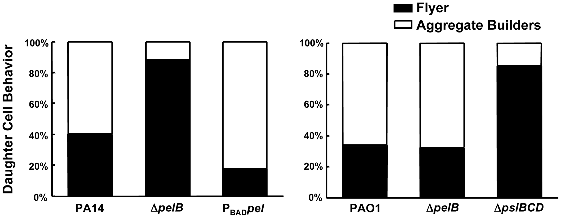 Pel impacts daughter cell behavior in early PA14 biofilms.